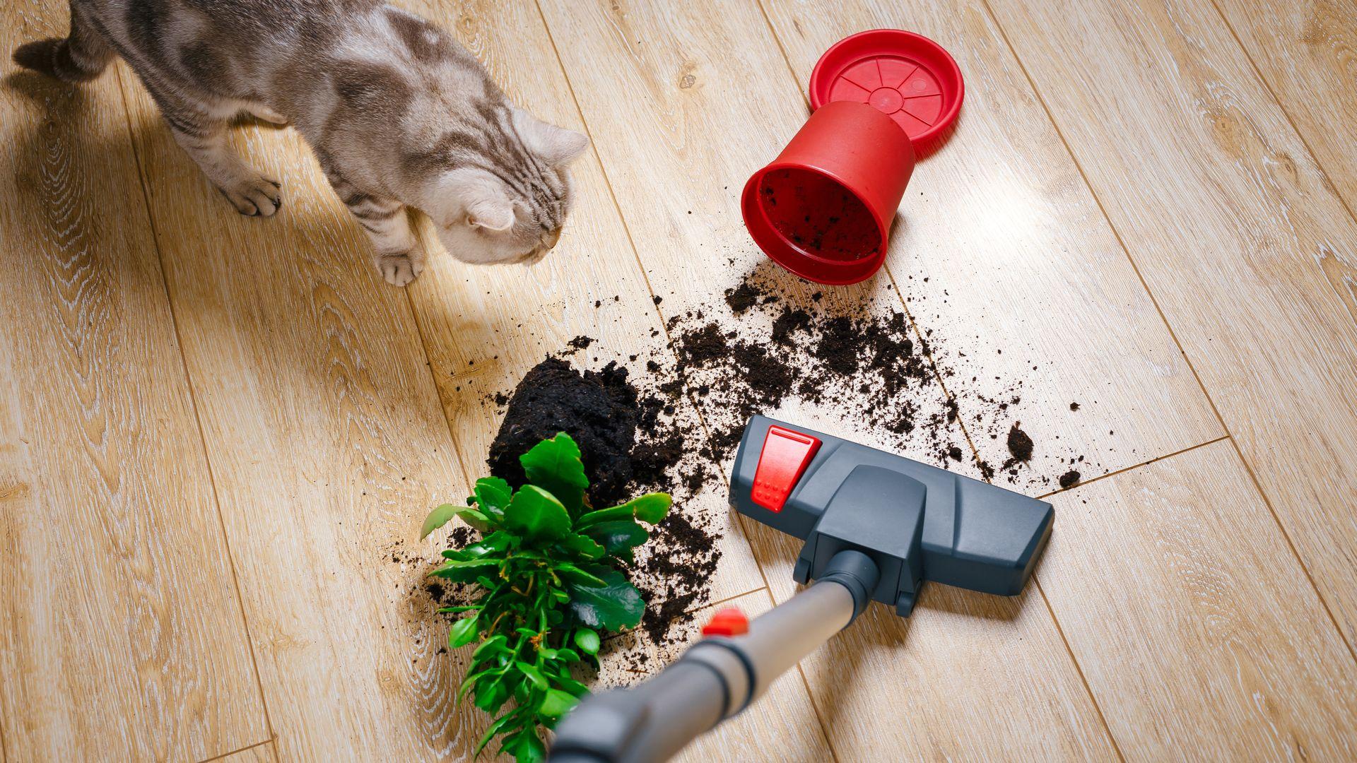 Aspiradores de pó 1.600W são bons para limpezas mais pesadas. (Imagem: Reprodução/Shutterstock)