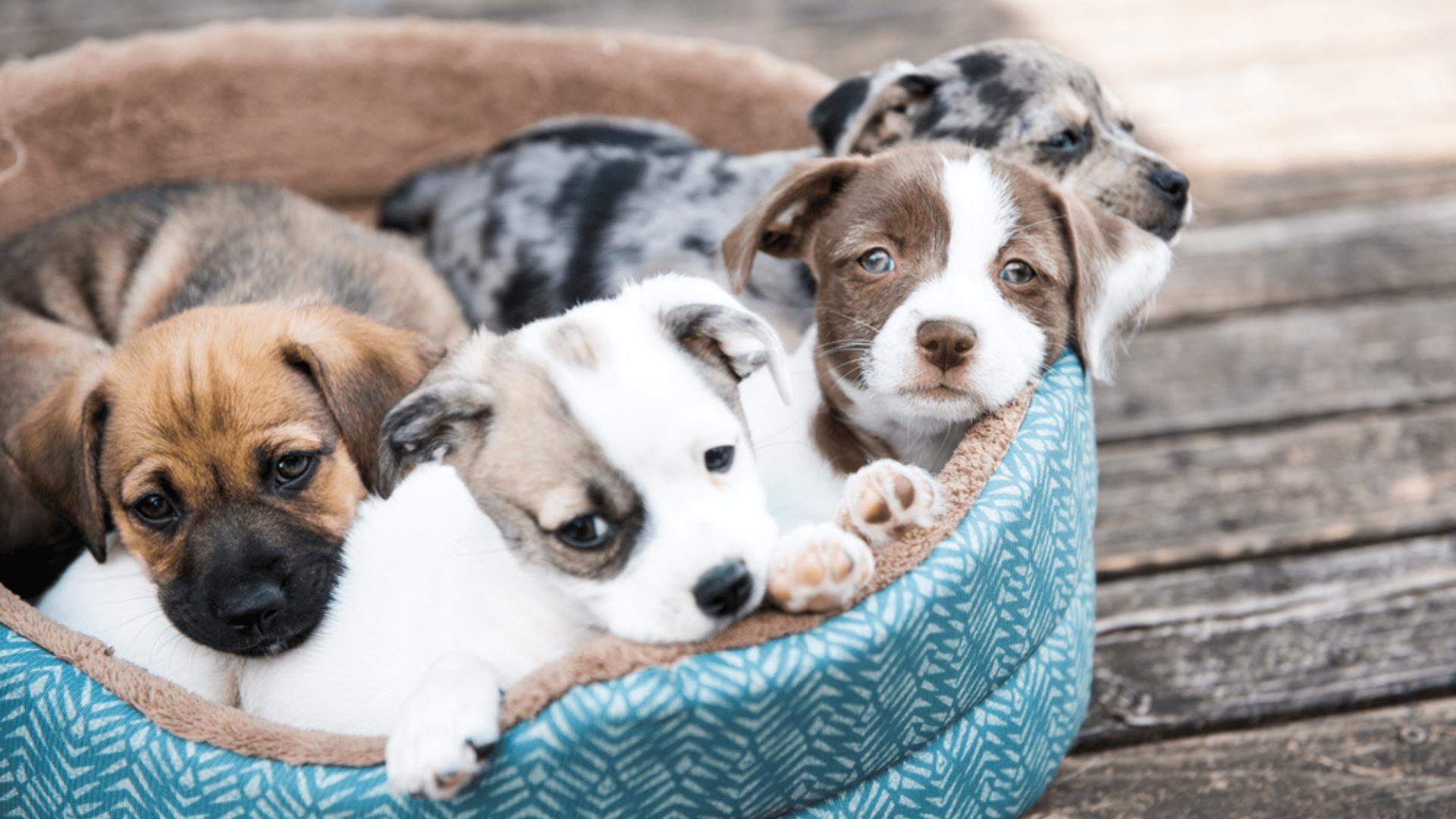 Confira o que levar em conta na hora de escolher a melhor caminha para o seu pet! (Reprodução/Shutterstock)