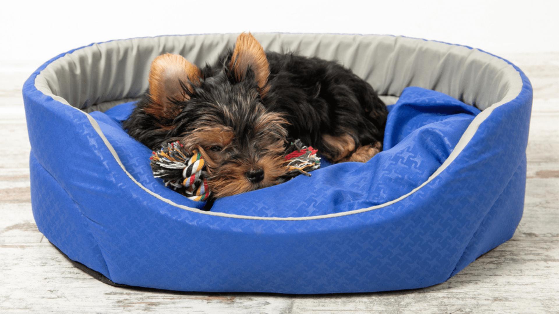 O tamanho e o formato deve ser adequado para que o cachorro se sinta confortável (Reprodução/Shutterstock)