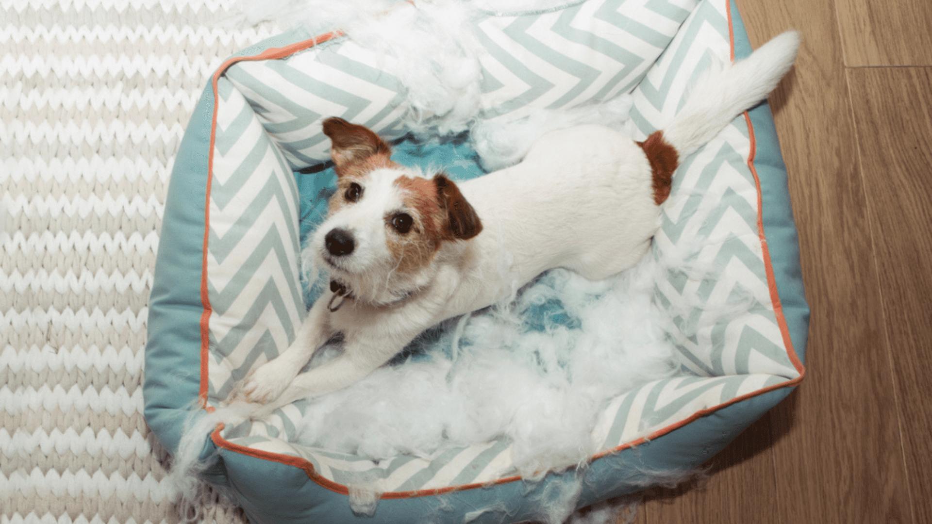 É importante que as camas sejam feitas com componentes atóxicos e hipoalergênicos (Reprodução/Shutterstock)