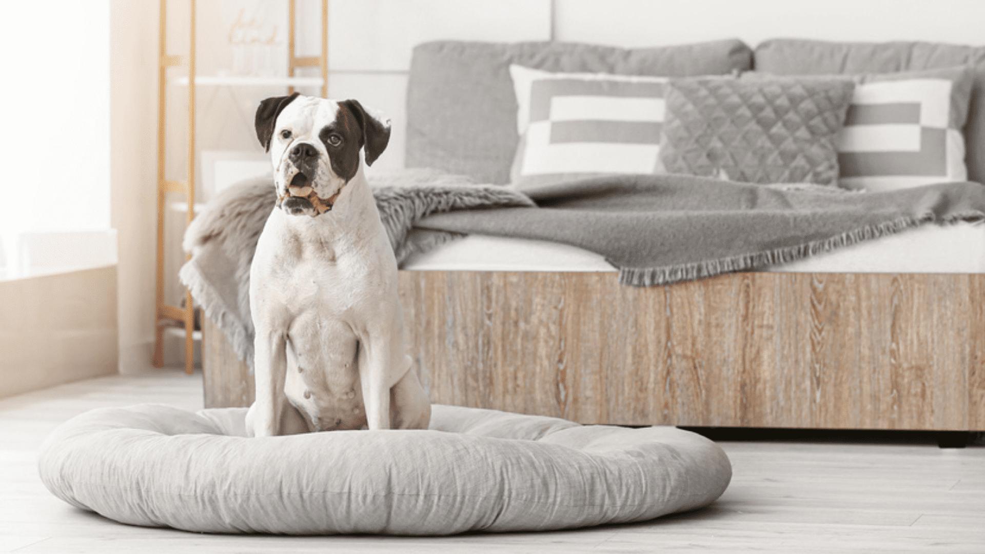 A cama almofadão ou colchão é indicada pra cachorros de todos os portes (Reprodução/Shutterstock)