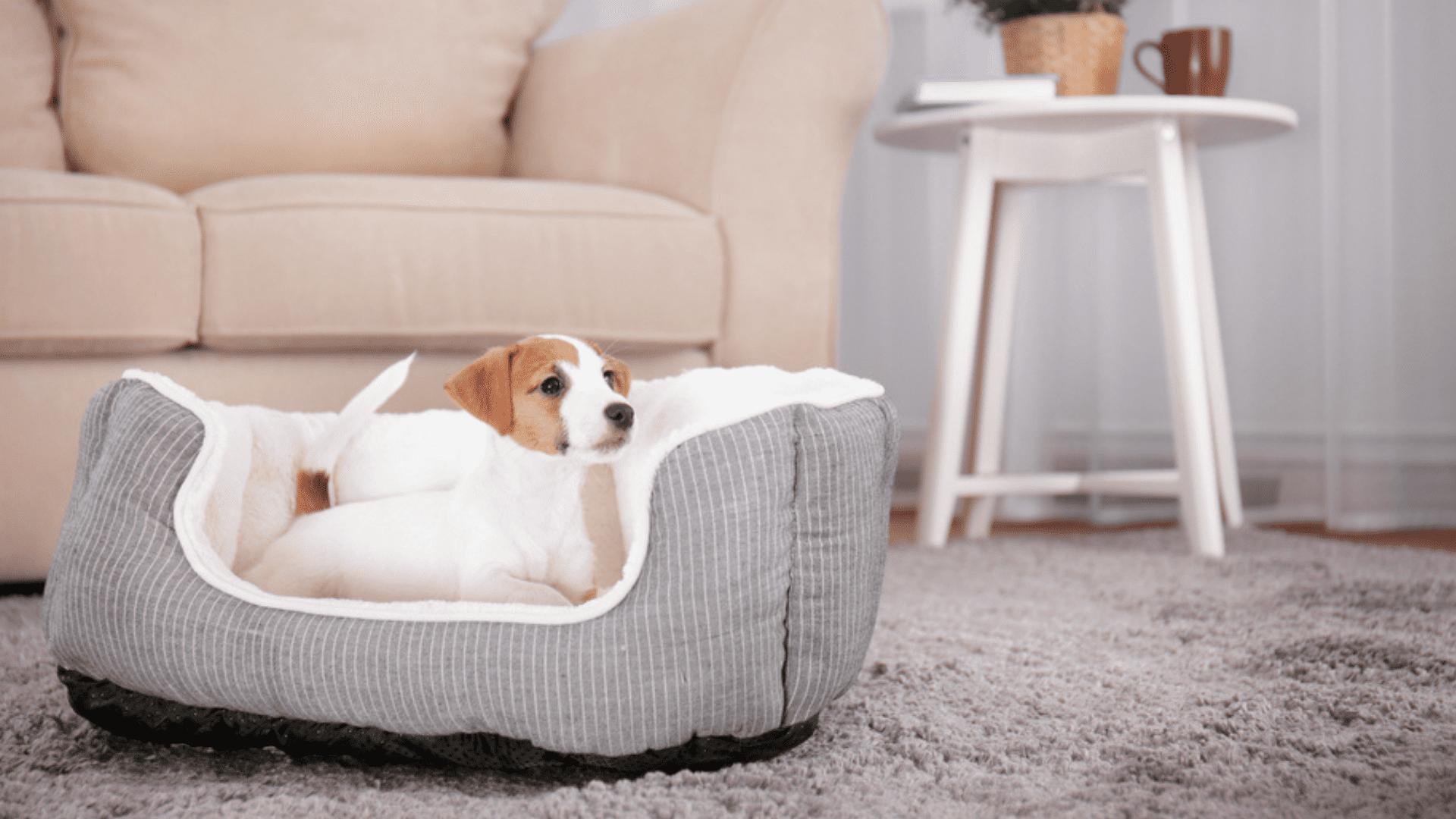 A cama ninho ou com laterais altas confere mais conforto ao pet de pequeno e médio porte (Reprodução/Shutterstock)