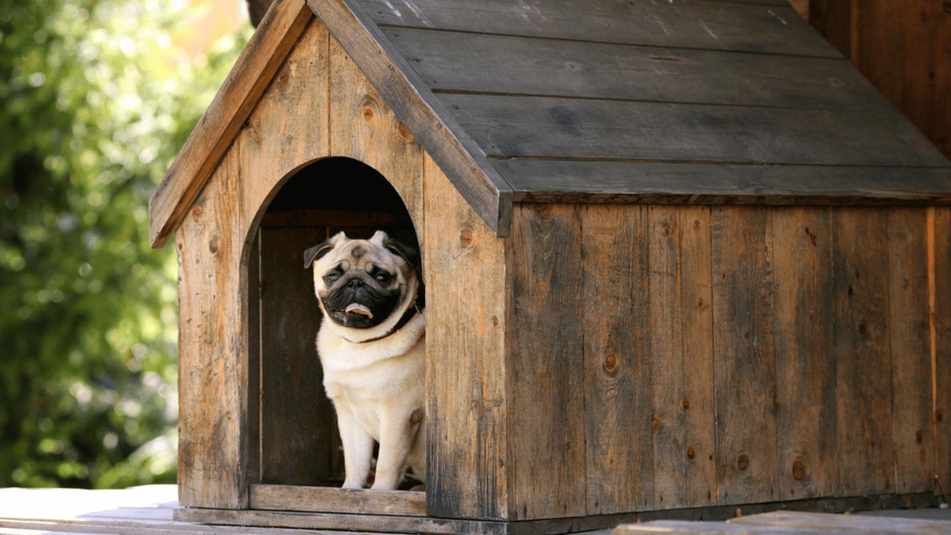 A casinha de madeira funciona como um ótimo isolante térmico (Reprodução/Shutterstock)