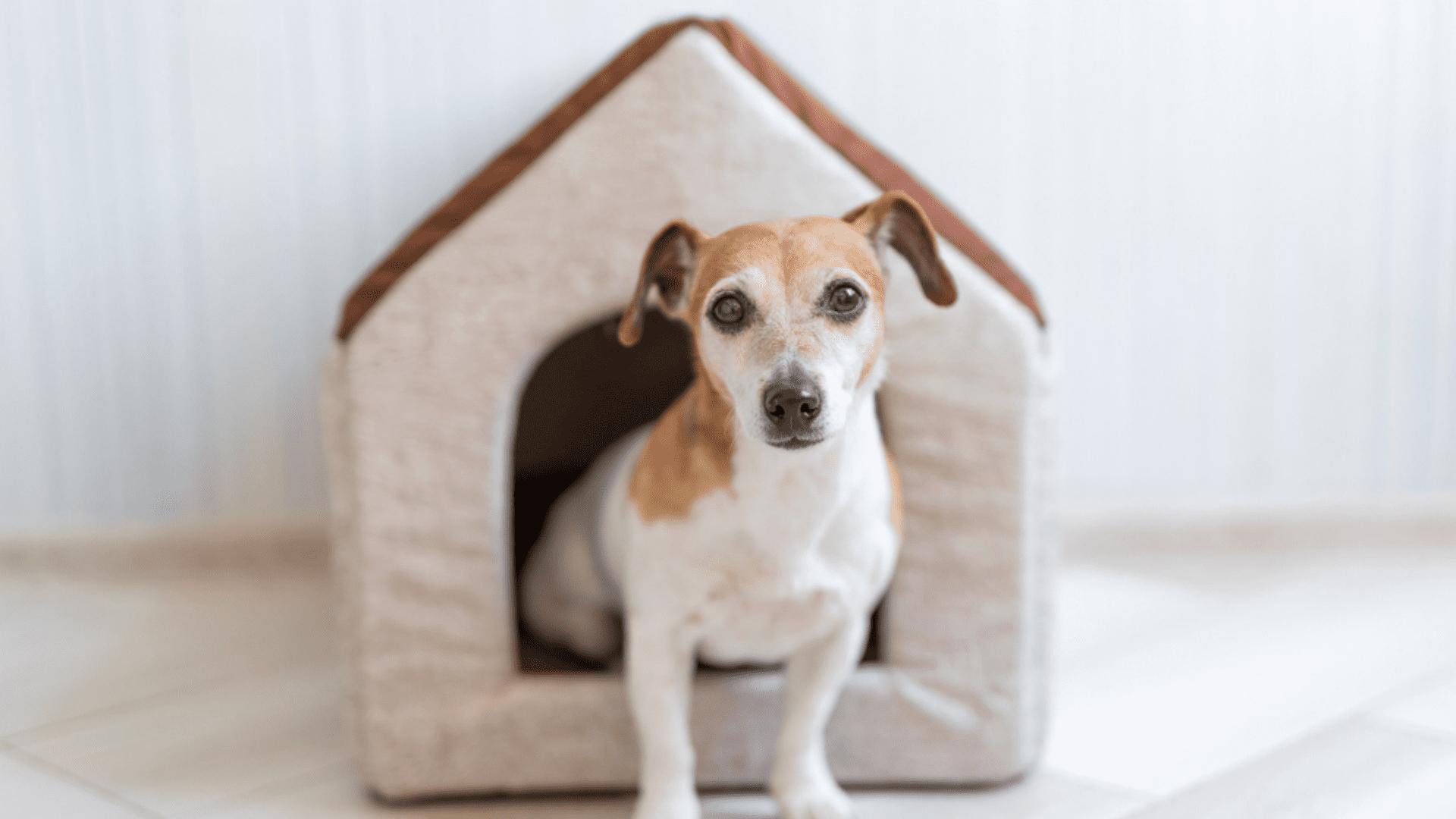 A casinha de tecido é apropriada para se usar dentro de casa ou apartamento (Reprodução/Shutterstock)