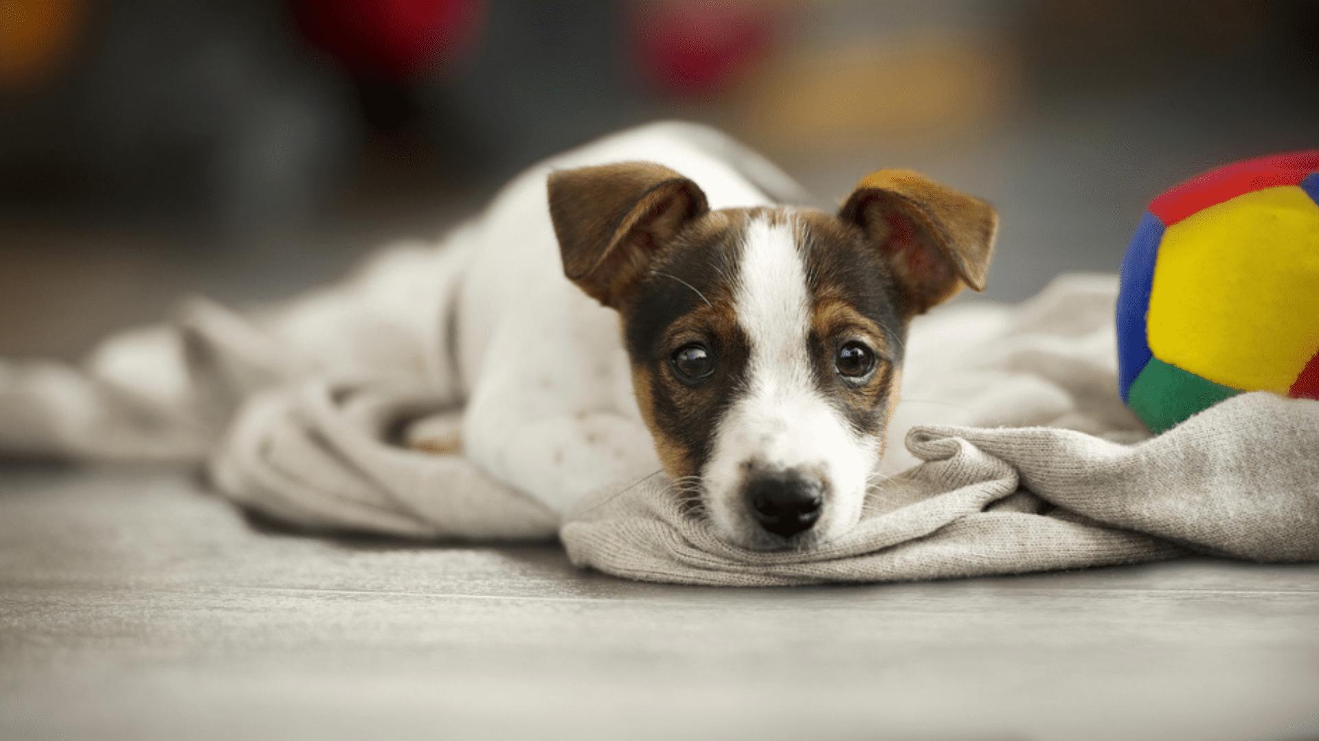É legal equipar a casinha do seu pet com brinquedos e cobertores para que o local fique mais confortável (Reprodução/Shutterstock)