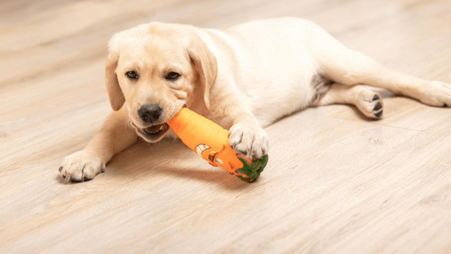 O mordedor para cachorro é um brinquedo com textura para estimular o fortalecimento dos dentes (Reprodução/Shutterstock)
