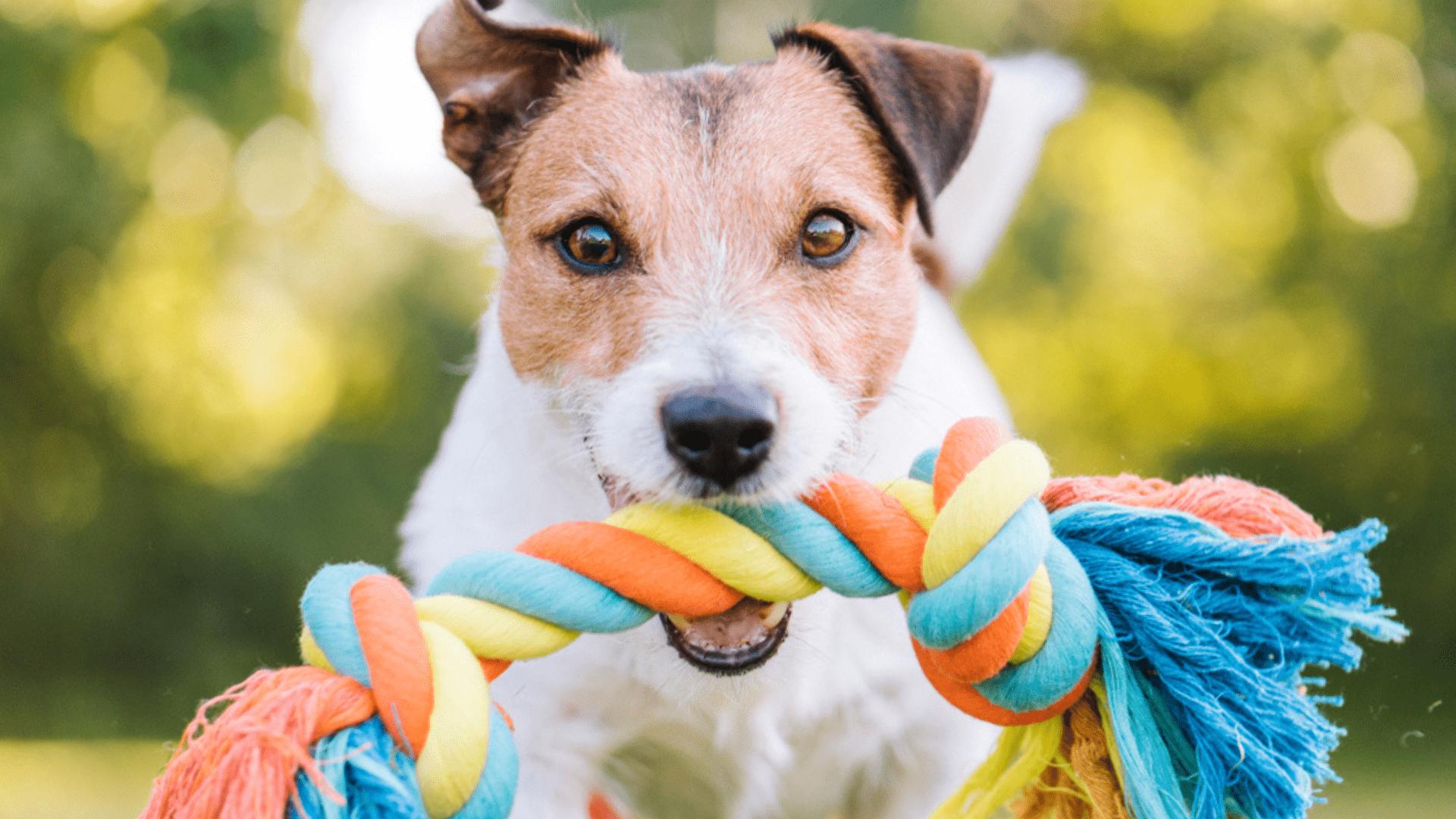 A corda para cachorro ajuda a reduzir a ansiedade do animal (Reprodução/Shutterstock)