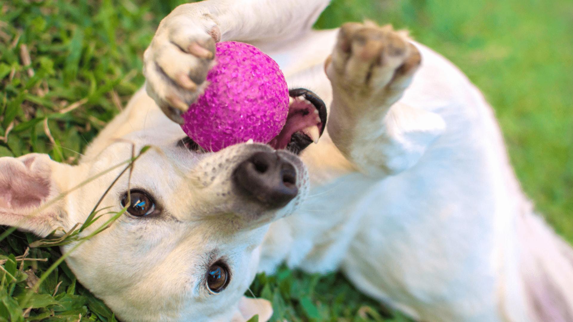 A bolinha para cachorro é um dos brinquedos que os pets mais gostam (Reprodução/Shutterstock)