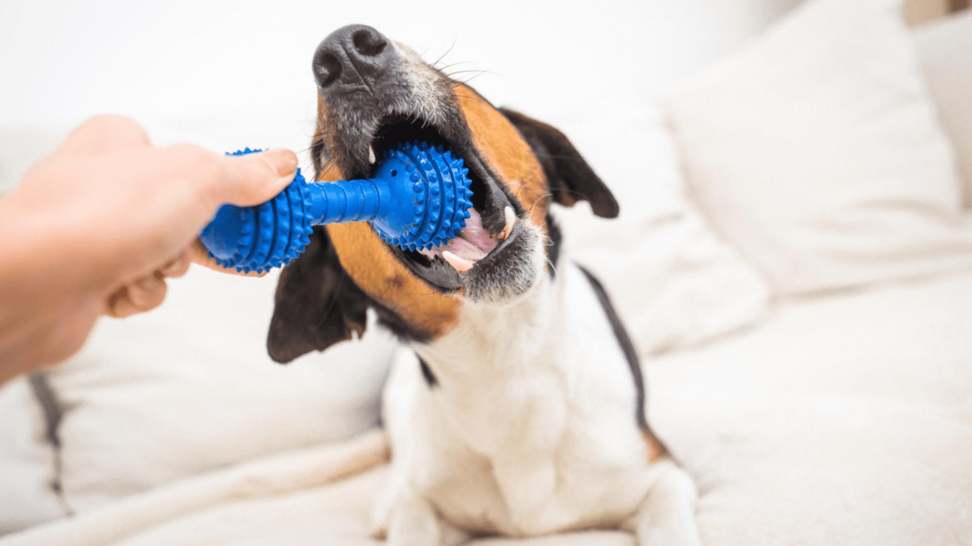 O mordedor para cachorro é um brinquedo de morder com textura diferenciada (Reprodução/Shutterstock)