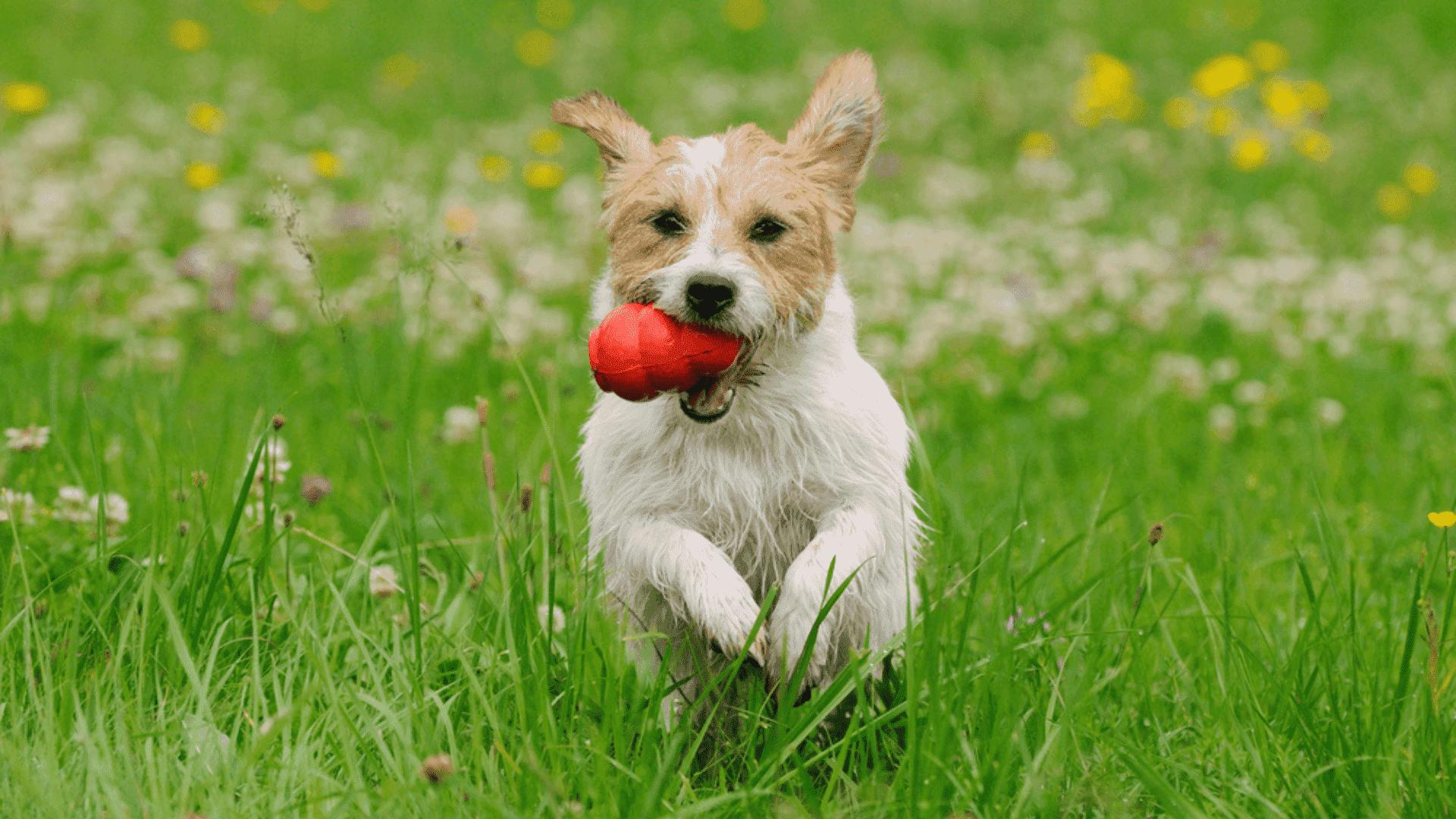 O brinquedo interativo, que esconde petiscos, estimula a inteligência e as funções cognitivas do cachorro (Reprodução/Shutterstock)