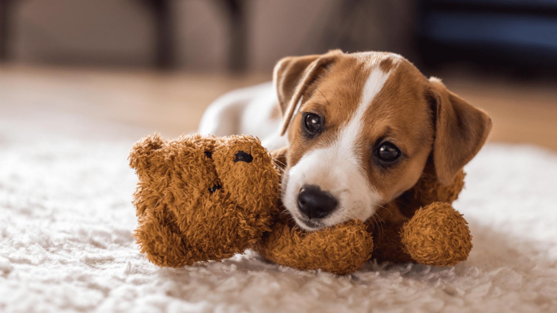 Além de servir como brinquedo para cachorro, a pelúcia é uma ótima companheira para o pet (Reprodução/Shutterstock)