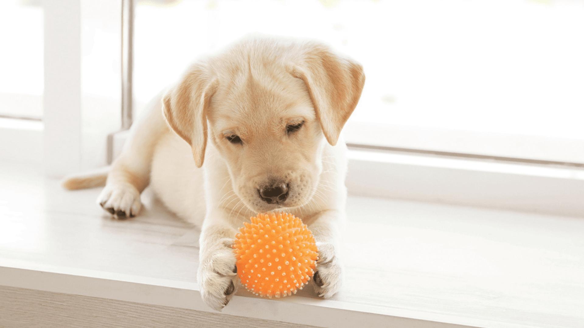 A bolinha para cachorro é barata e, de quebra, gasta a energia do filhote (Reprodução/Shutterstock)