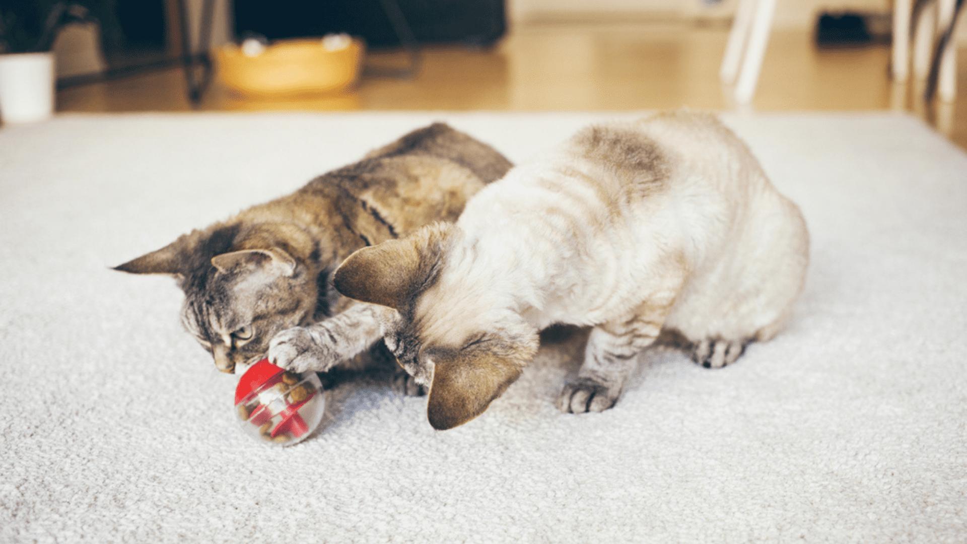 Brinquedos que escondem petiscos ou jogos de inteligência estimulam a mente do gato (Reprodução/Shutterstock)