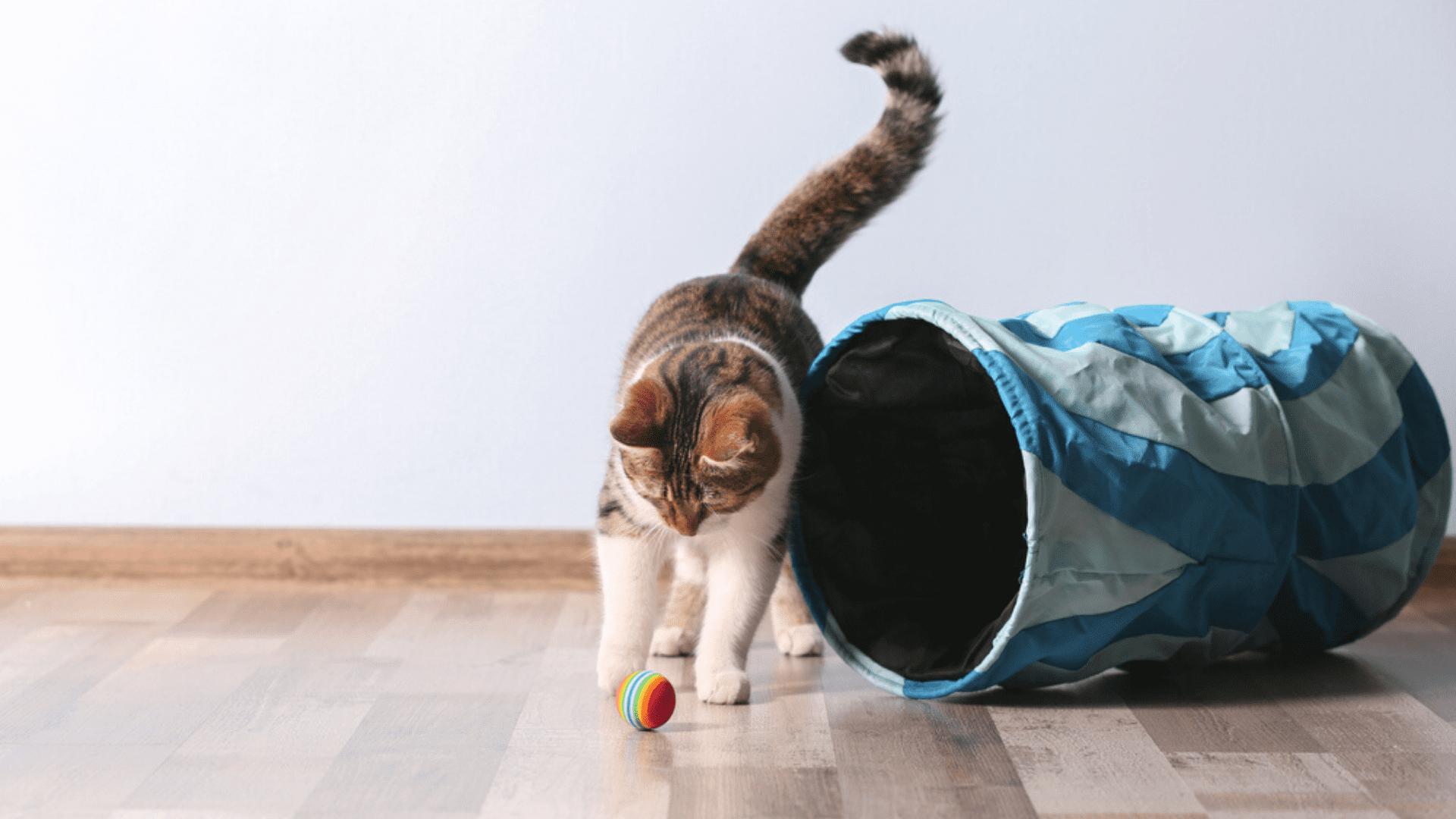 O túnel ou circuito é comumente utilizado para gastar energia do gato (Reprodução/Shutterstock)
