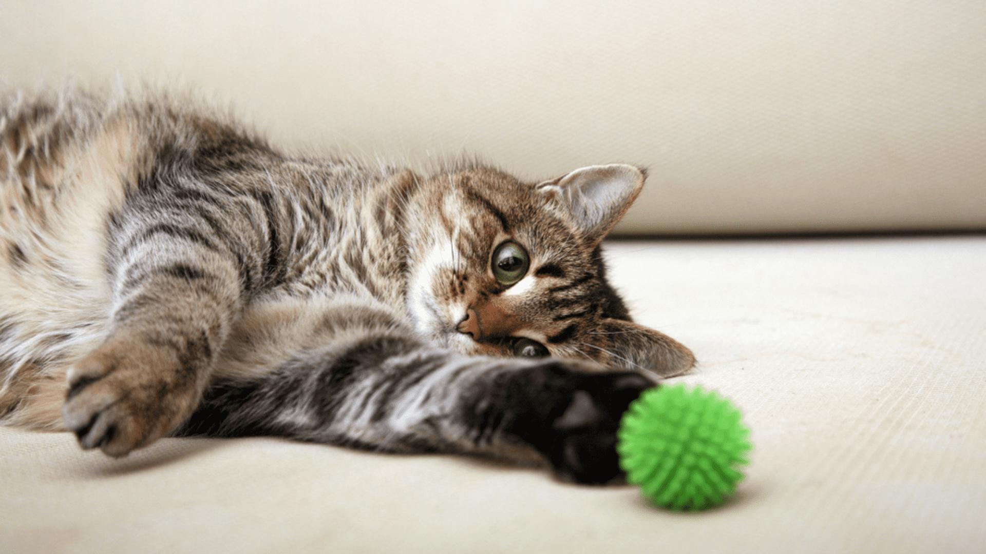 A bolinha é recomendada para exercitar o físico e as funções cognitivas do gato (Reprodução/Shutterstock)