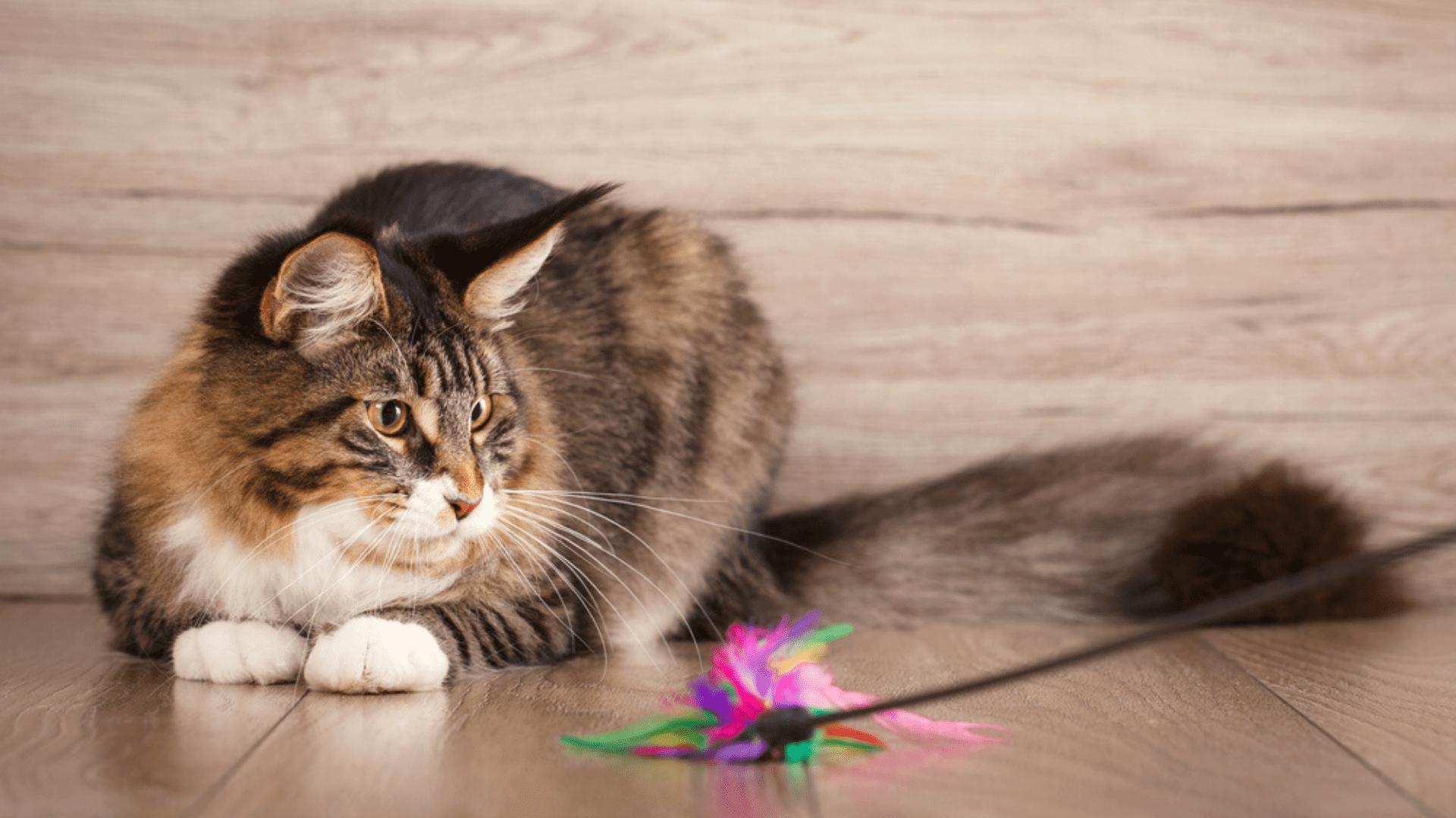 A varinha normalmente vem com uma bolinha ou penas em sua ponta (Reprodução/Shutterstock)
