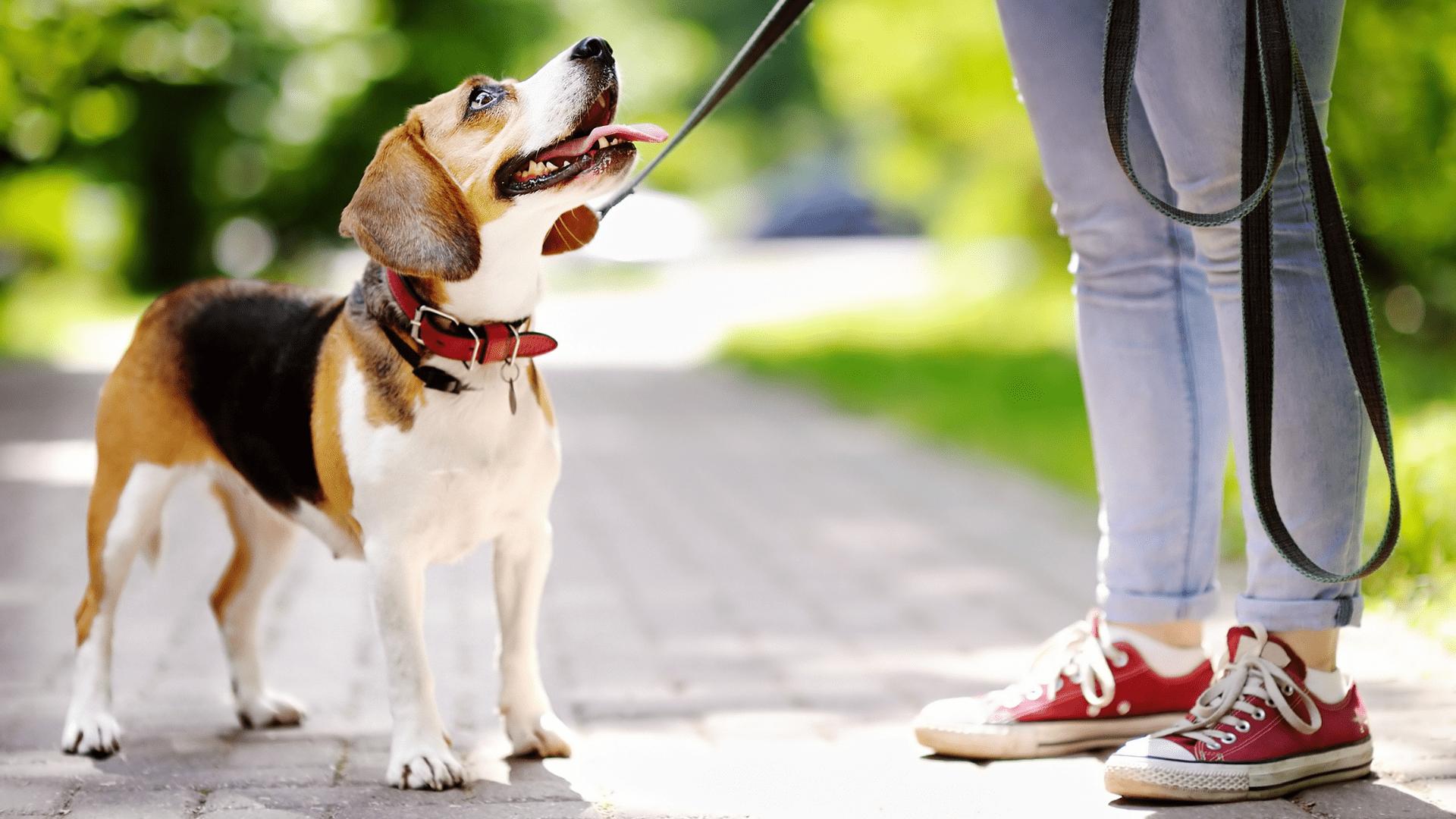 Não se esqueça de cuidar bem da coleira do seu cachorro! (Reprodução/Shutterstock)