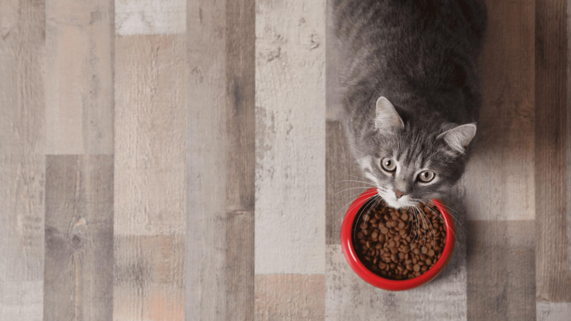 Veja os diferentes tipos e conheça os melhores comedouros para gato! (Reprodução/Shutterstock)