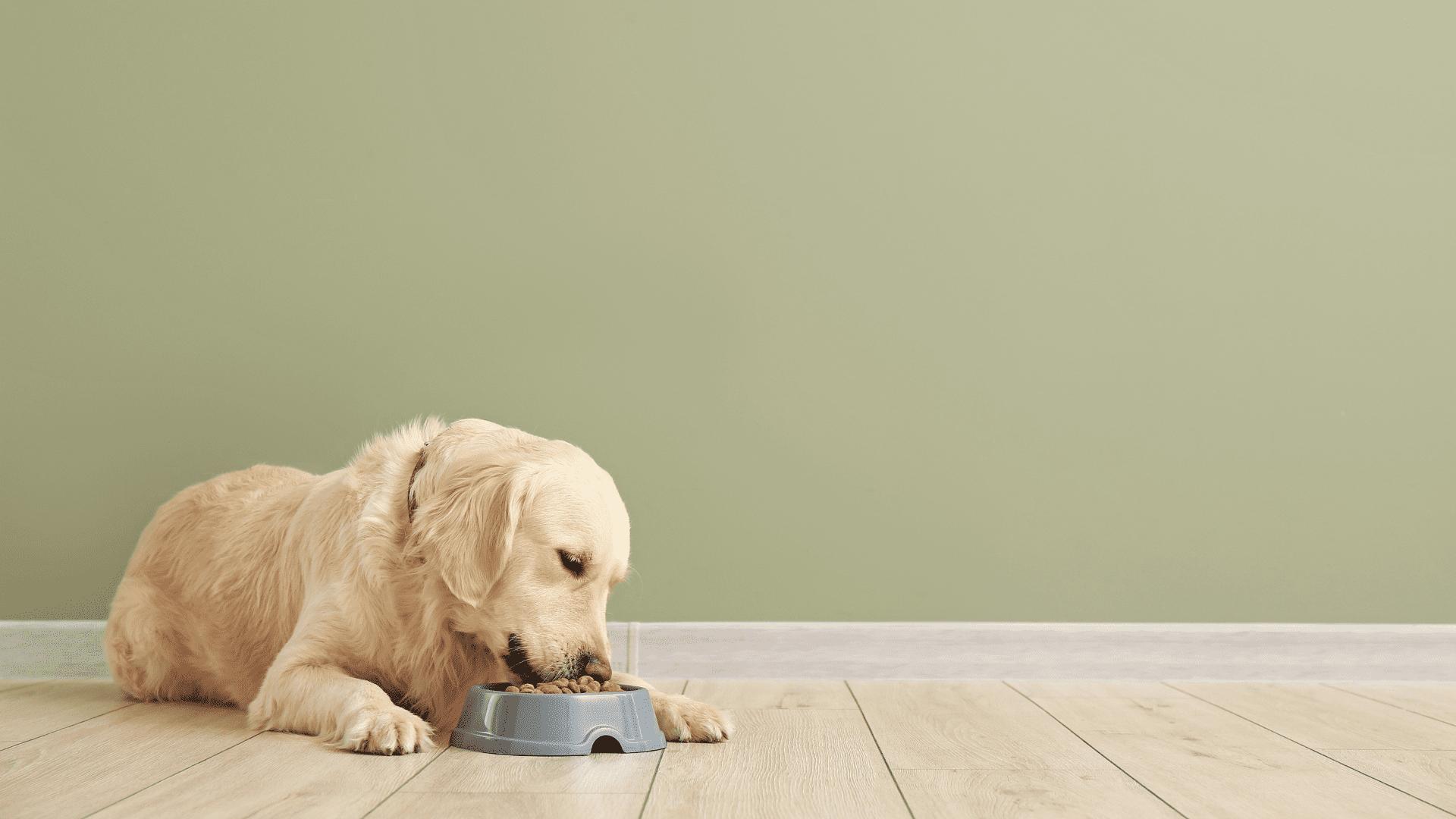 Entenda os principais tipos de ração para cachorro existentes no mercado para poder escolher a melhor para o seu pet (Reprodução/Shutterstock)