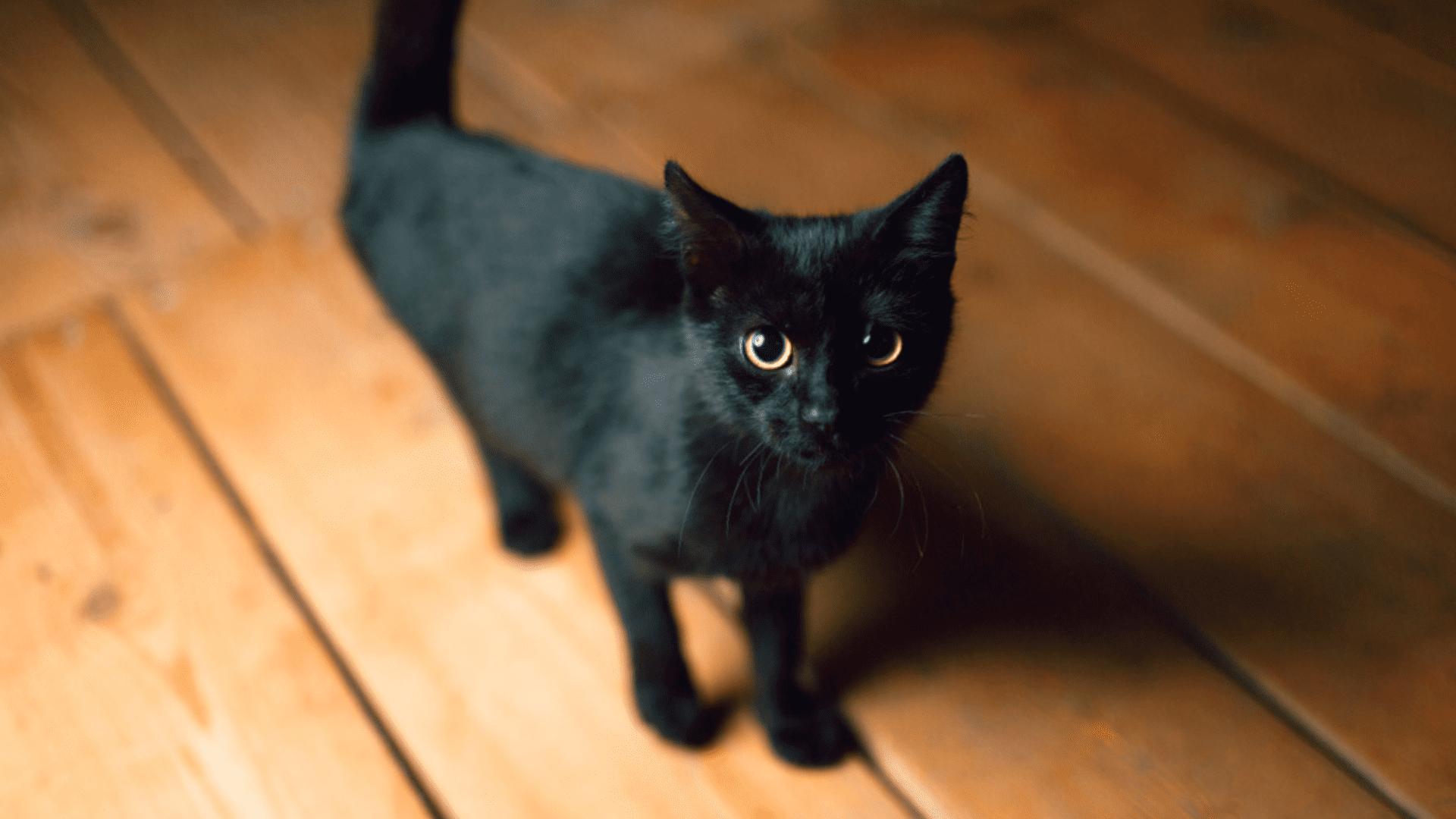 8 produtos para gato que todo dono deve ter - DeUmZoom
