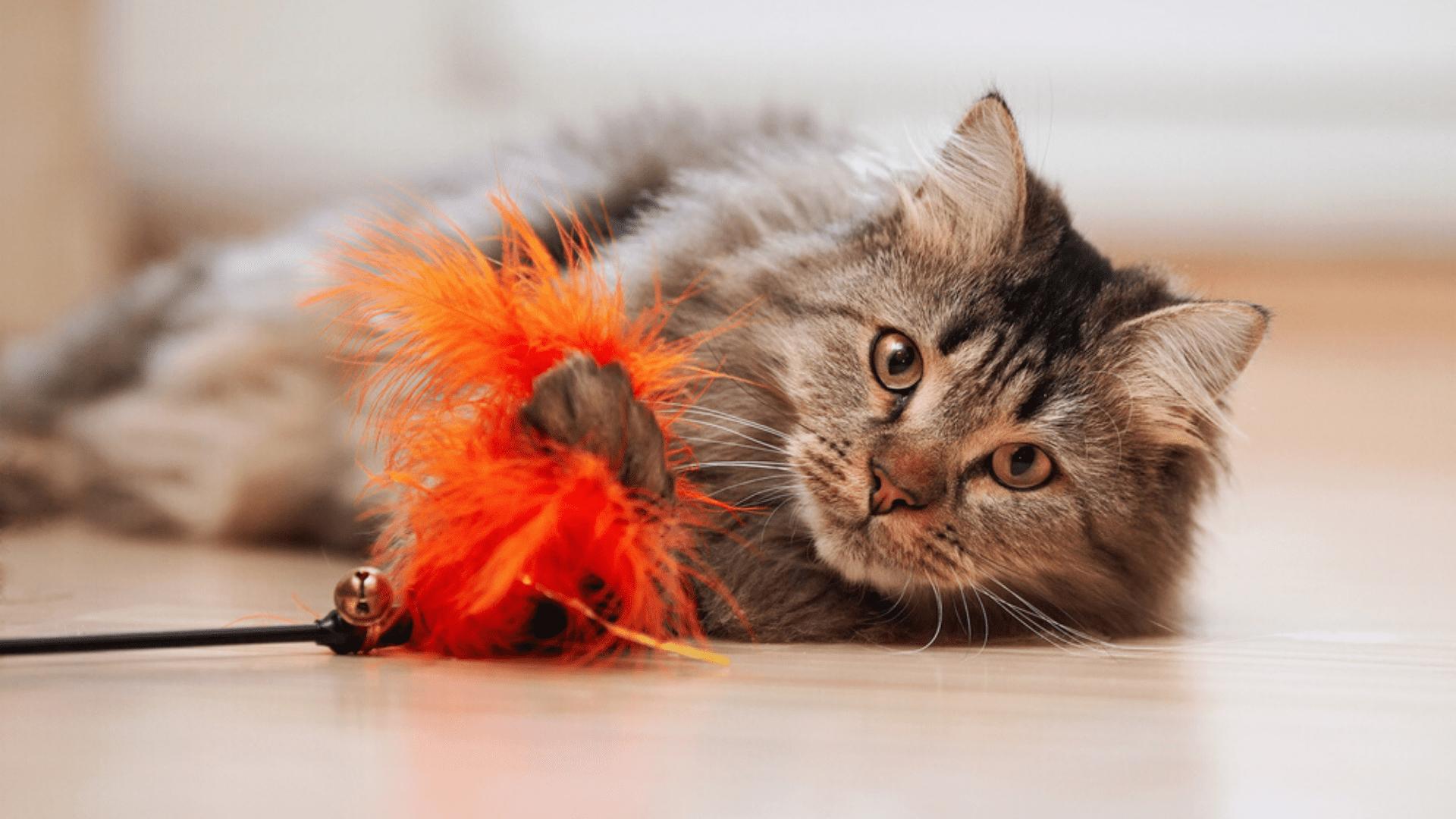 Filhotes gostam de brinquedos em formato de varinha (Reprodução/Shutterstock)