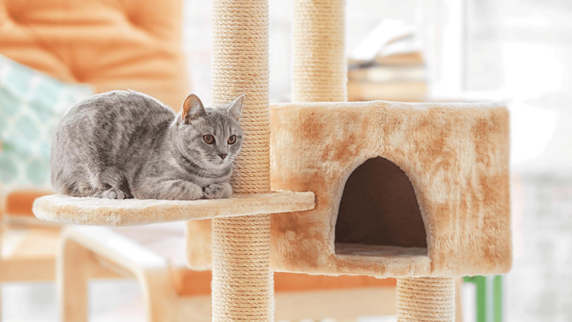 O arranhador para gato pode ser acoplado a um brinquedo interativo (Reprodução/Shutterstock)
