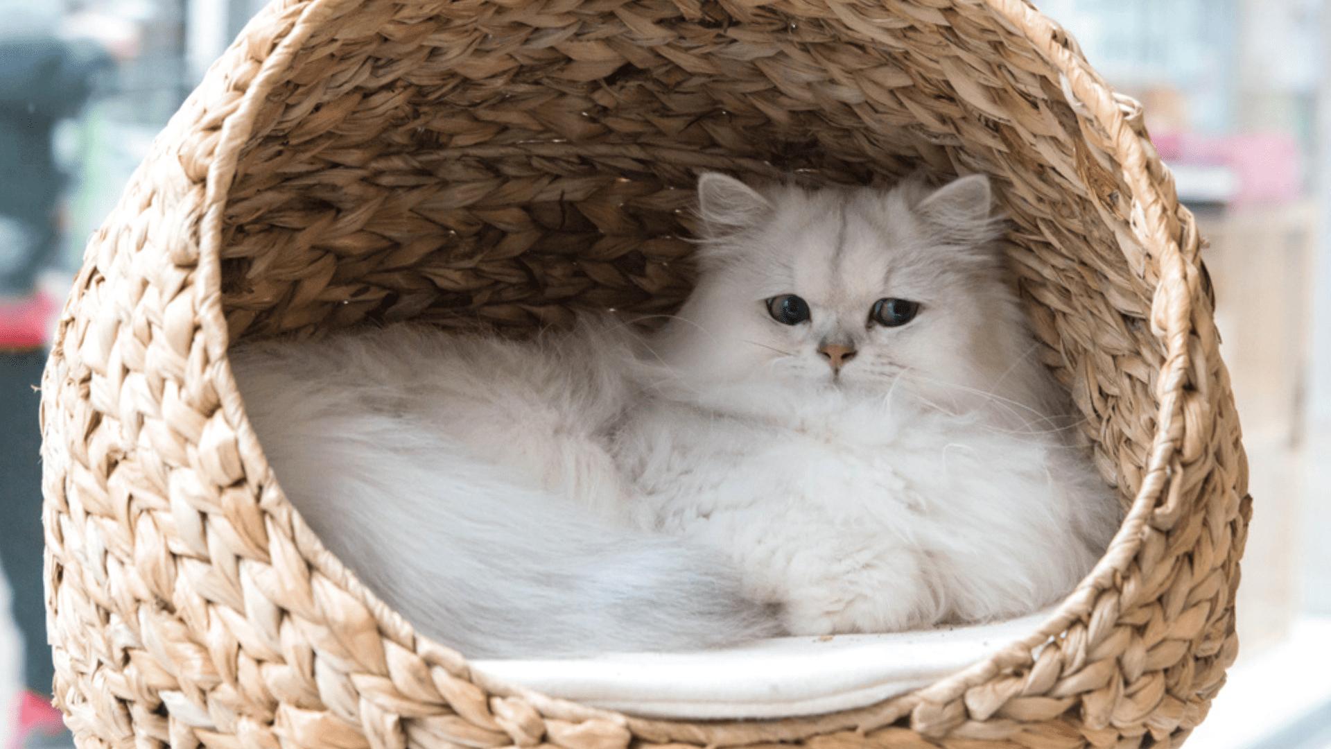 A caminha para gato pode ser encontrada em vários estilos, como o iglu ou cabaninha (Reprodução/Shutterstock(
