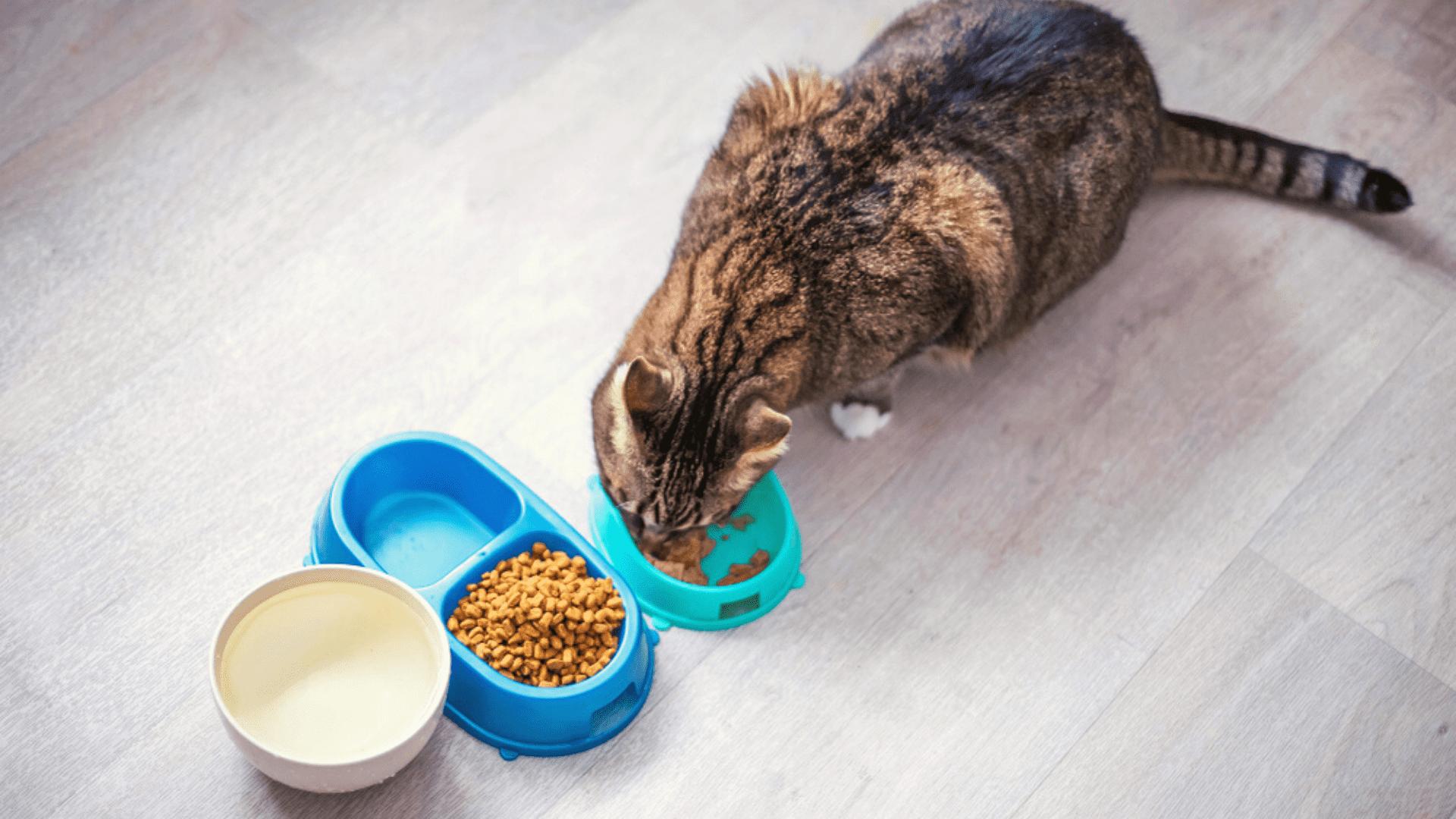 O comedouros e bebedouro para gato podem ser manuais ou automáticos (Reprodução/Shutterstock)