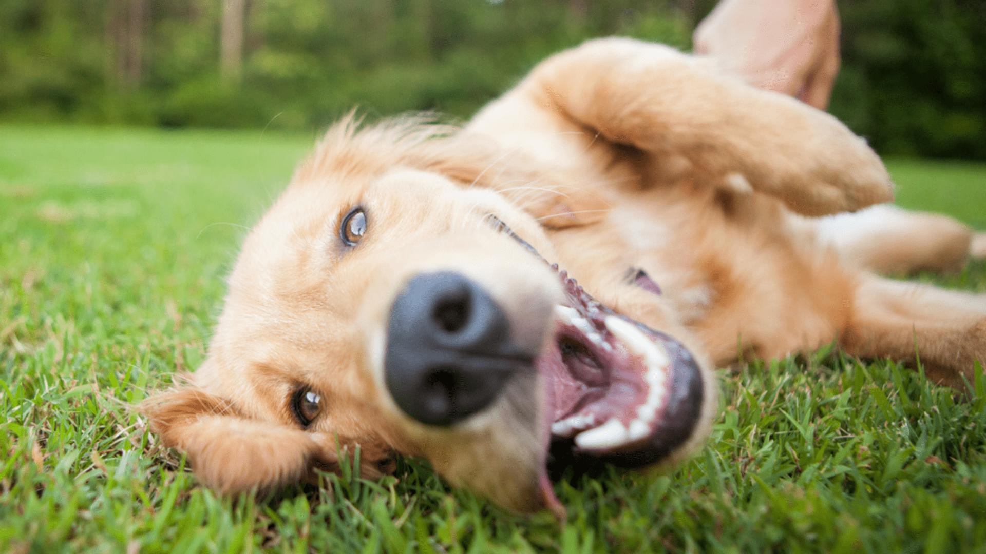 Veja os produtos para cachorro que são fundamentais no dia a dia! (Reprodução/Shutterstock)