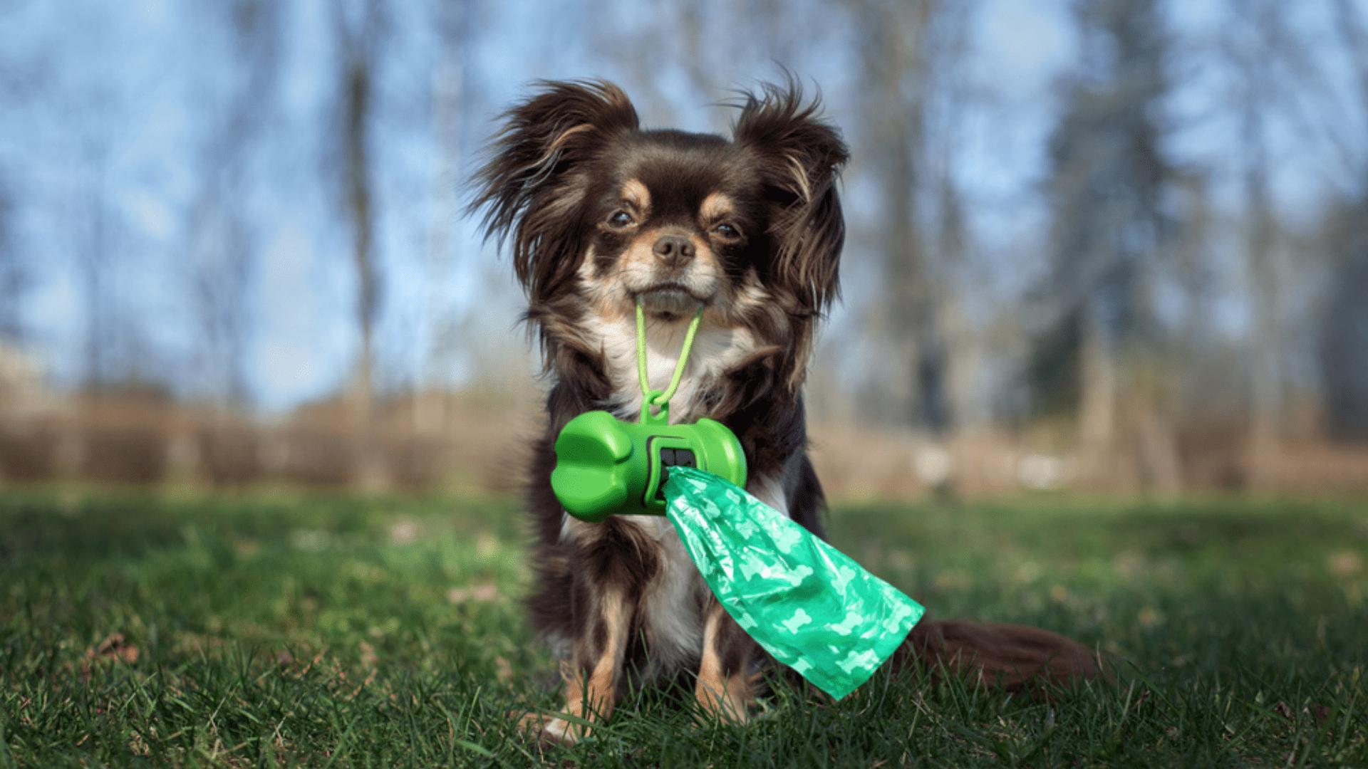 Os saquinhos higiênicos para cachorro normalmente possuem um gancho para acoplar na coleira (Reprodução/Shutterstock)