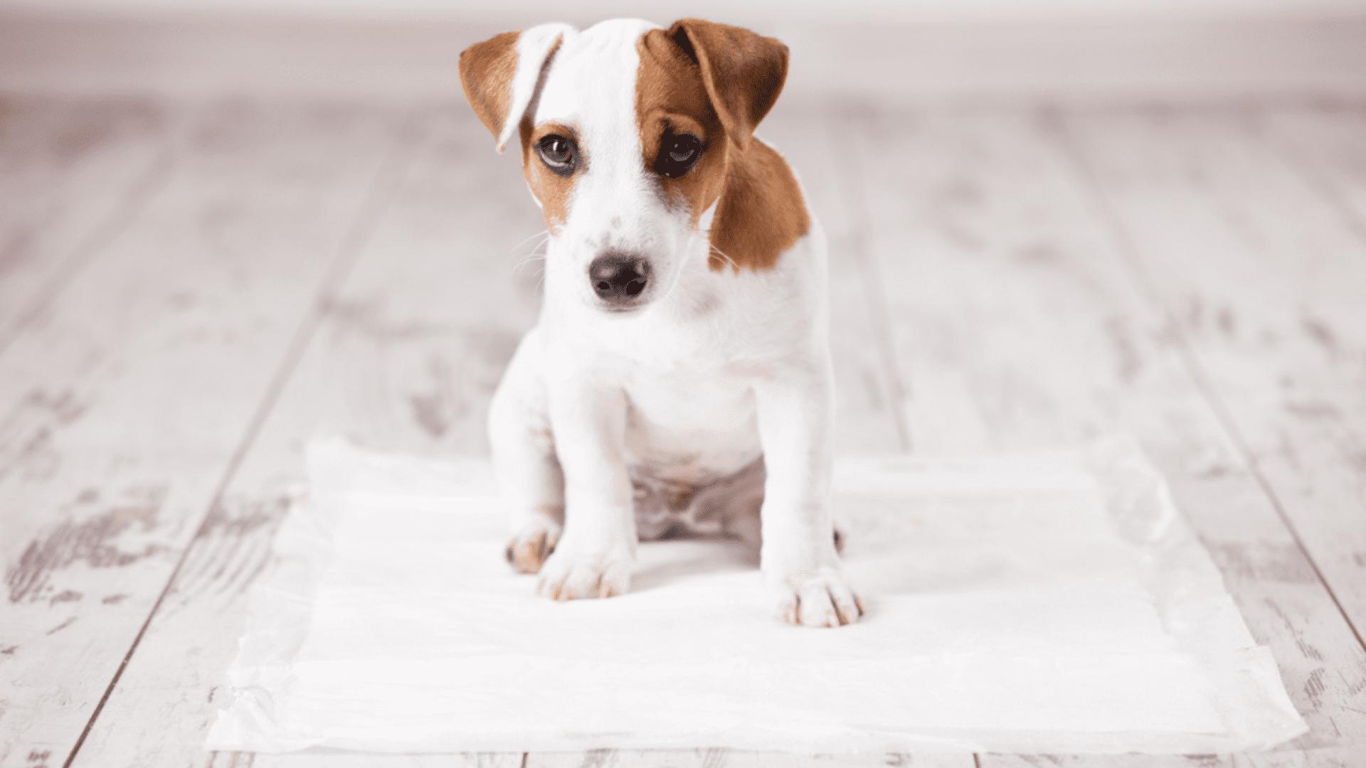 O tapete higiênico para cachorro retém o líquido e ameniza o cheiro do xixi (Reprodução/Shutterstock)