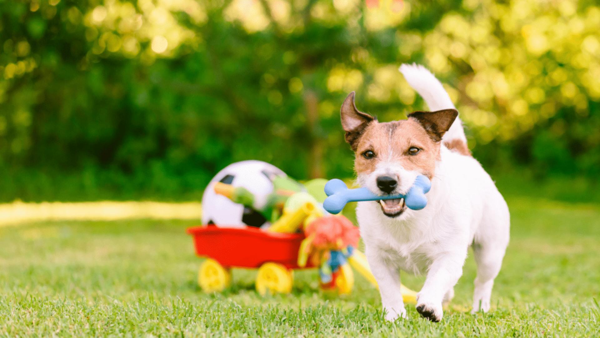 Os brinquedos para cachorro podem ajudar na ansiedade do pet (Reprodução/Shutterstock)