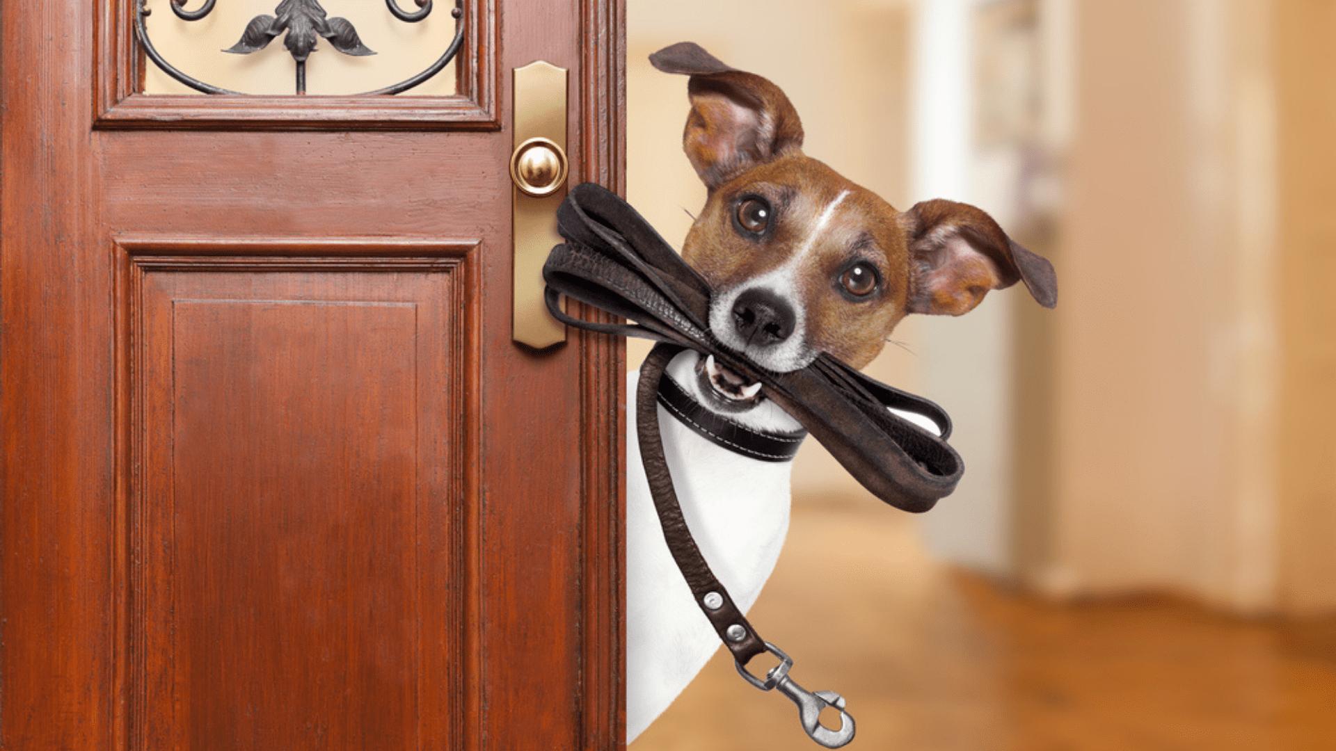 A coleira para cachorro também existe nos mais variados modelos, cores e formatos (Reprodução/Shutterstock)