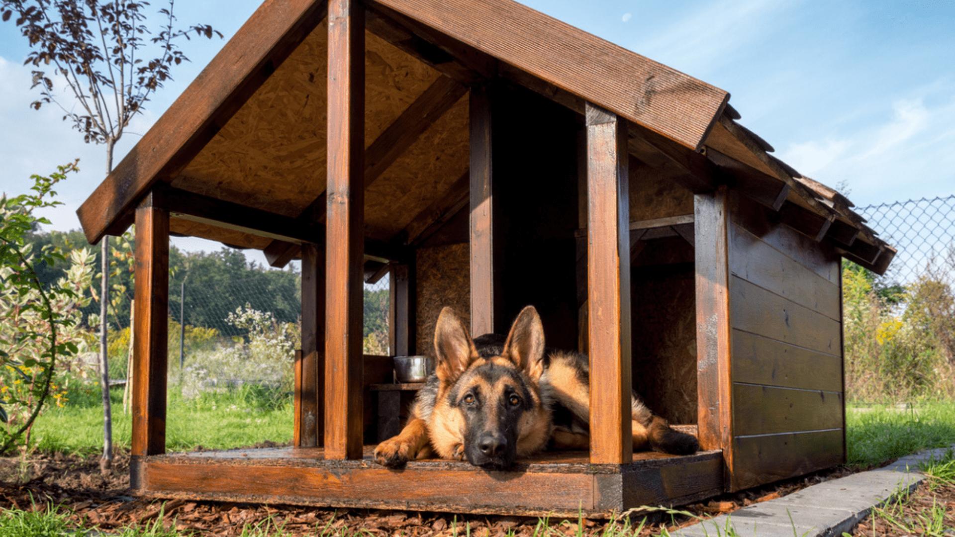 A casinha de cachorro é aconselhada para os pets que costumam dormir ao ar livre (Reprodução/Shutterstock)