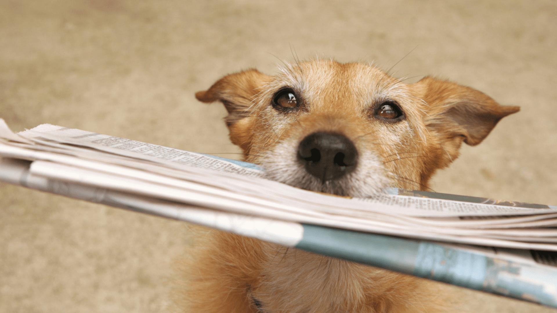 O tapete higiênico chega a ser ainda mais prático que o jornal (Reprodução/Shutterstock)