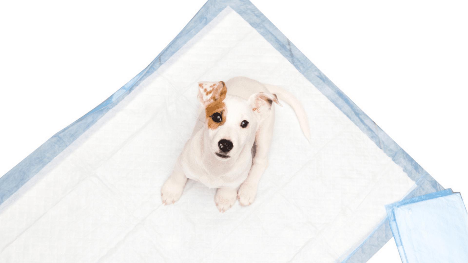 Entenda as vantagens e as desvantagens do tapete higiênico! (Reprodução/Shutterstock)