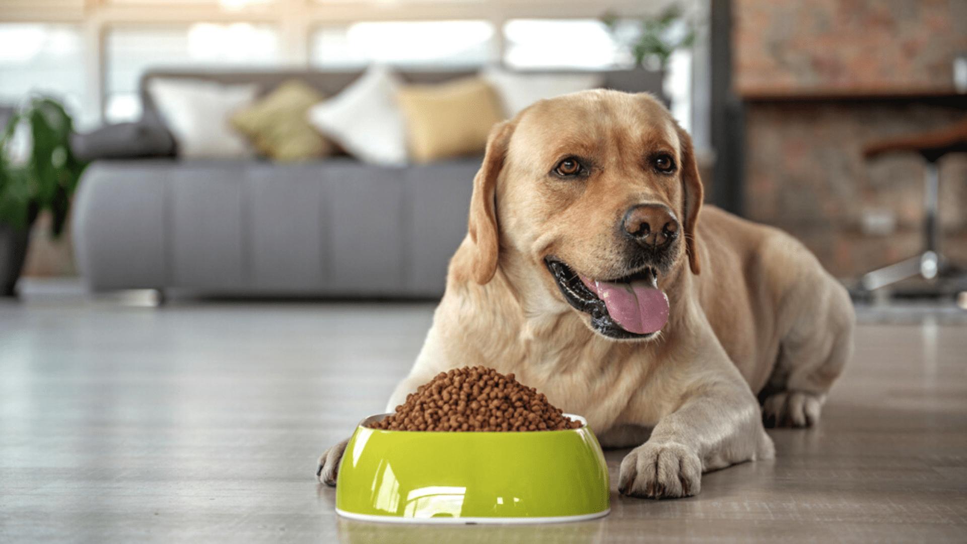 O comedouro para cachorro de plástico é o mais barato, mas também é o menos indicado (Imagem: Reprodução/Shutterstock)
