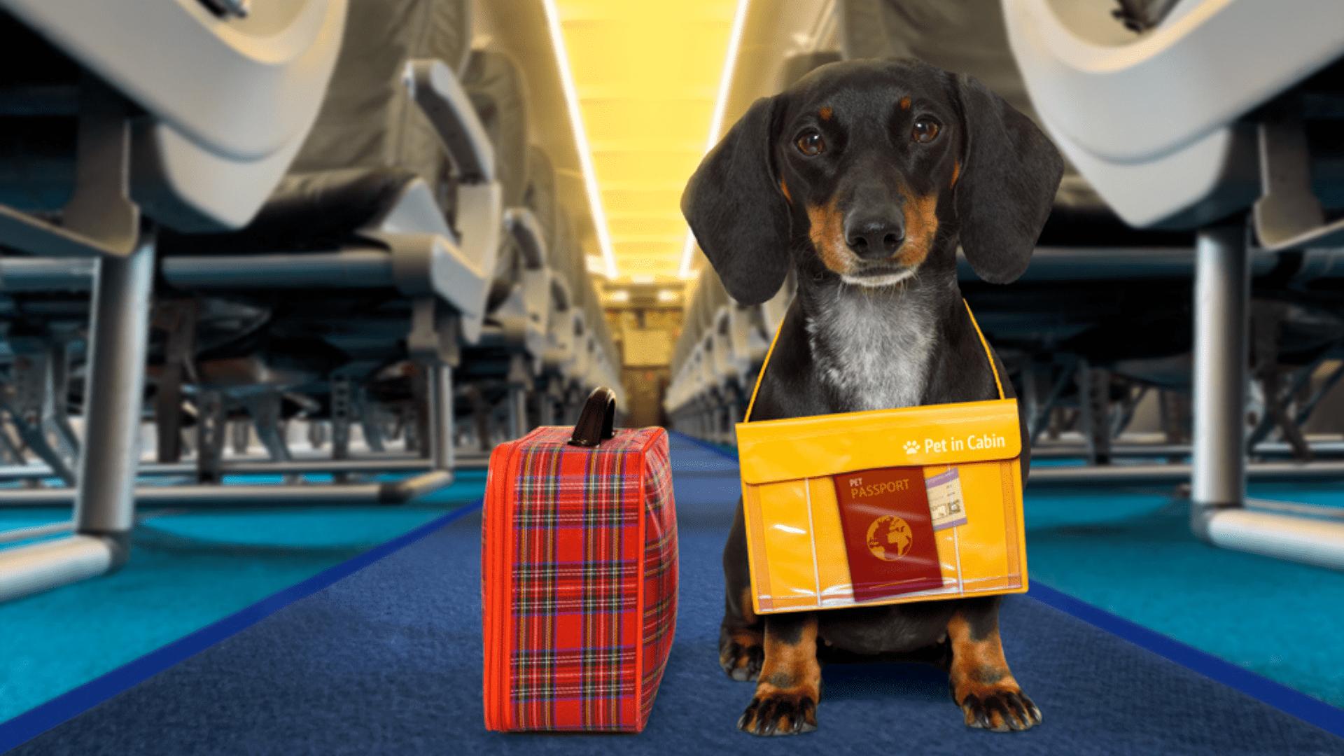 Fique por dentro de tudo o que é necessário para viajar com cachorro! (Reprodução/Shutterstock)