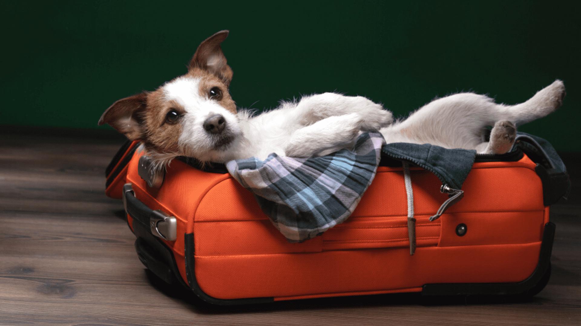 Não esqueça nenhum item para uma viagem mais segura! (Reprodução/Shutterstock)
