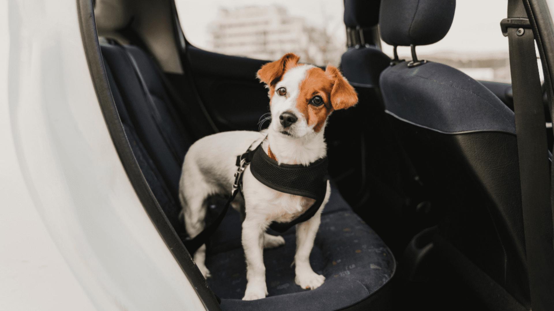 Aprenda tudo sobre viagem com cachorro de carro! (Reprodução/Shutterstock)