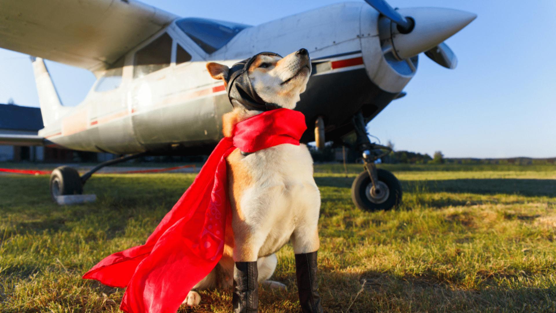 Veja o que é preciso para uma viagem com cachorro de avião! (Reprodução/Shutterstock)