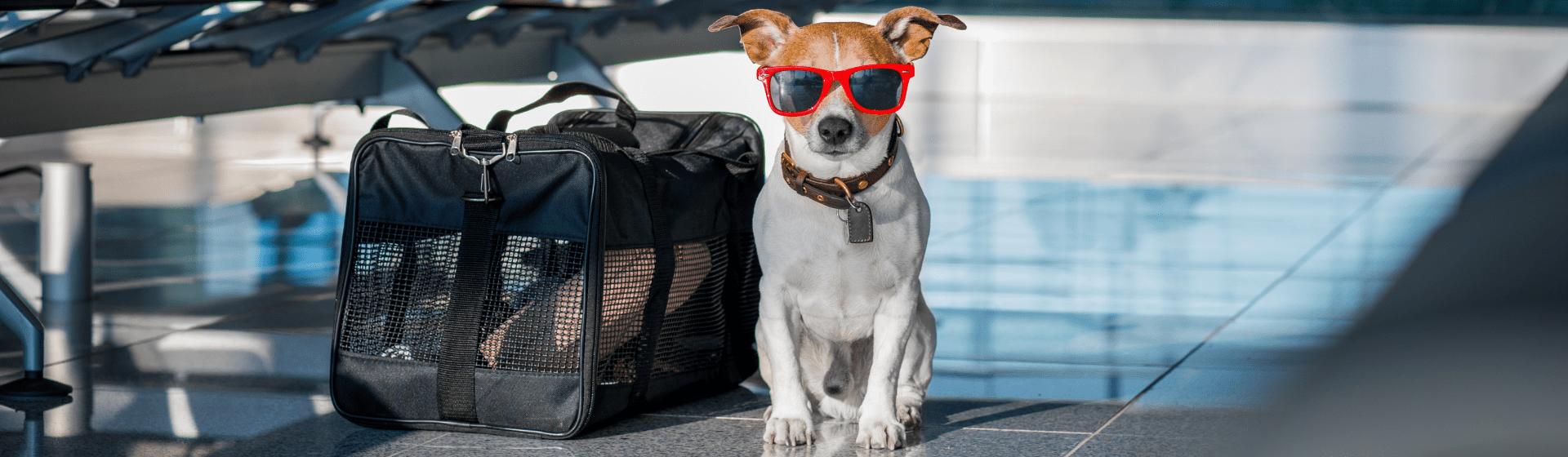 O que é preciso para viajar com um cachorro?