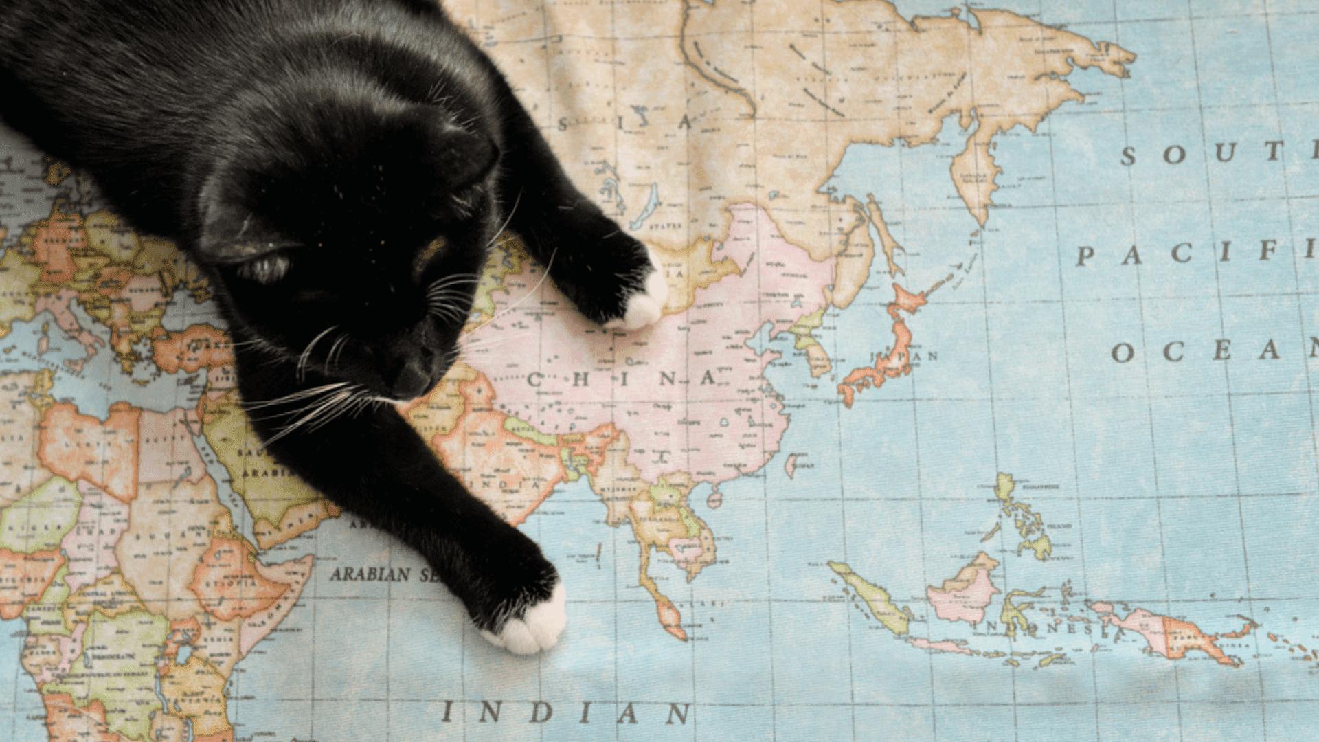 Confira as dicas que separamos com tudo o que você precisa saber para viajar com o seu gato! (Reprodução/Shutterstock)