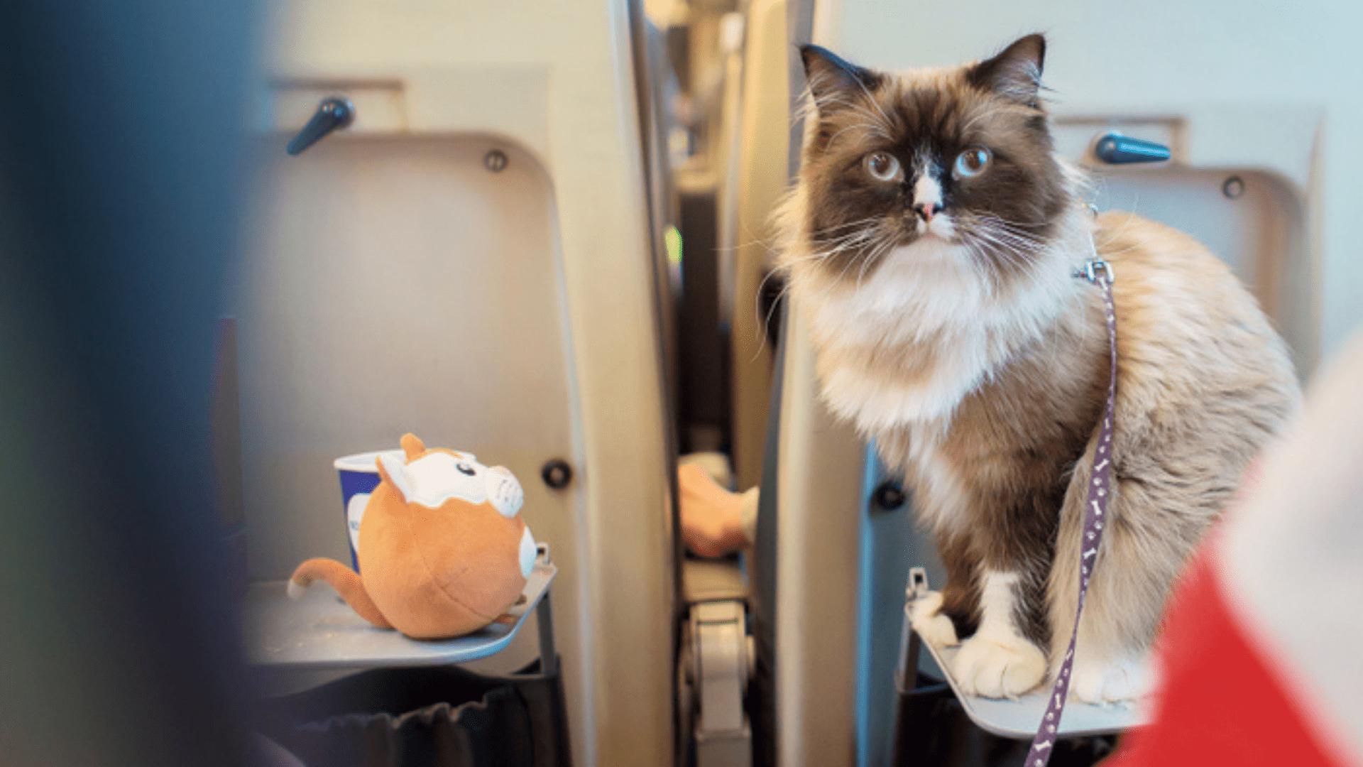 Fique preparado para viajar com o gato de ônibus! (Reprodução/Shutterstock)