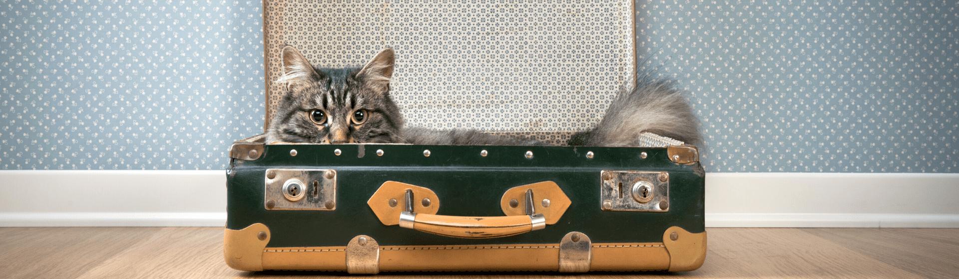O que é preciso para viajar com um gato?