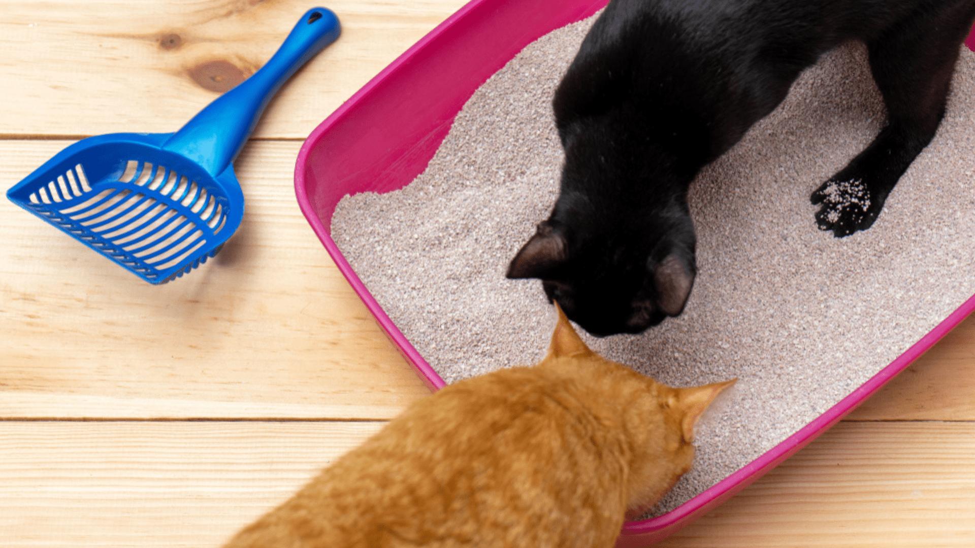 A areia para gato aglomerante é barata e prática (Imagem: Reprodução/Shutterstock)