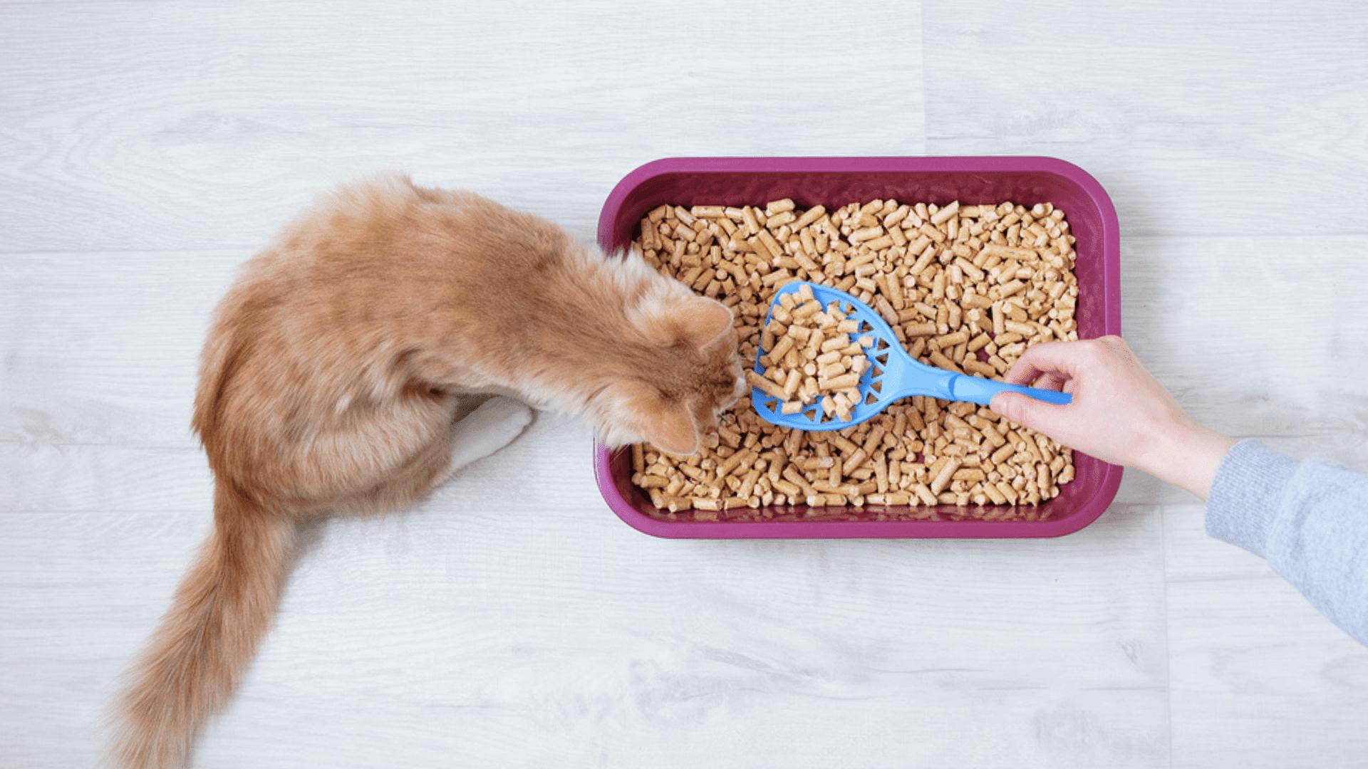 A areia para gato biodegradável é sustentável e reciclável (Imagem: Reprodução/Shutterstock)