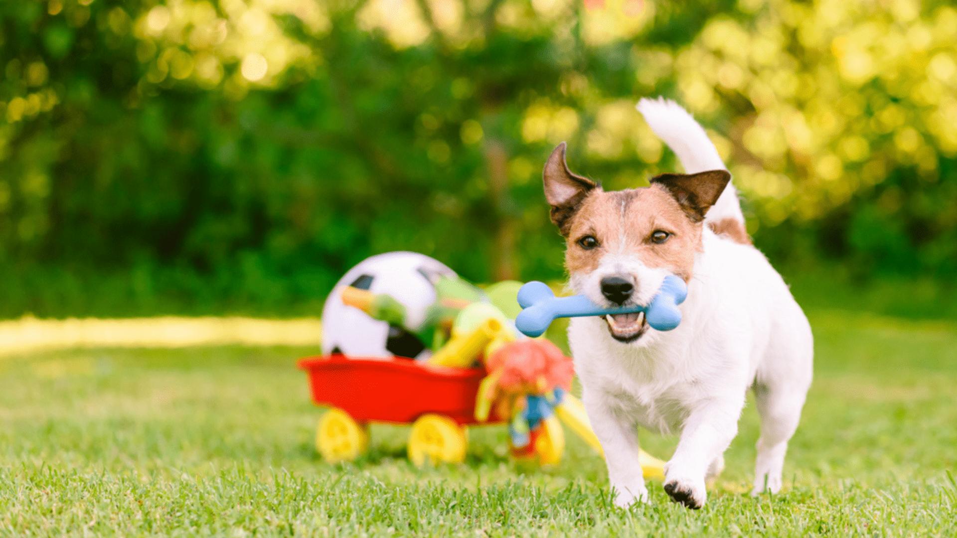 Veja quais são os melhores brinquedos para cachorro hiperativo! (Imagem: Reprodução/Shutterstock)