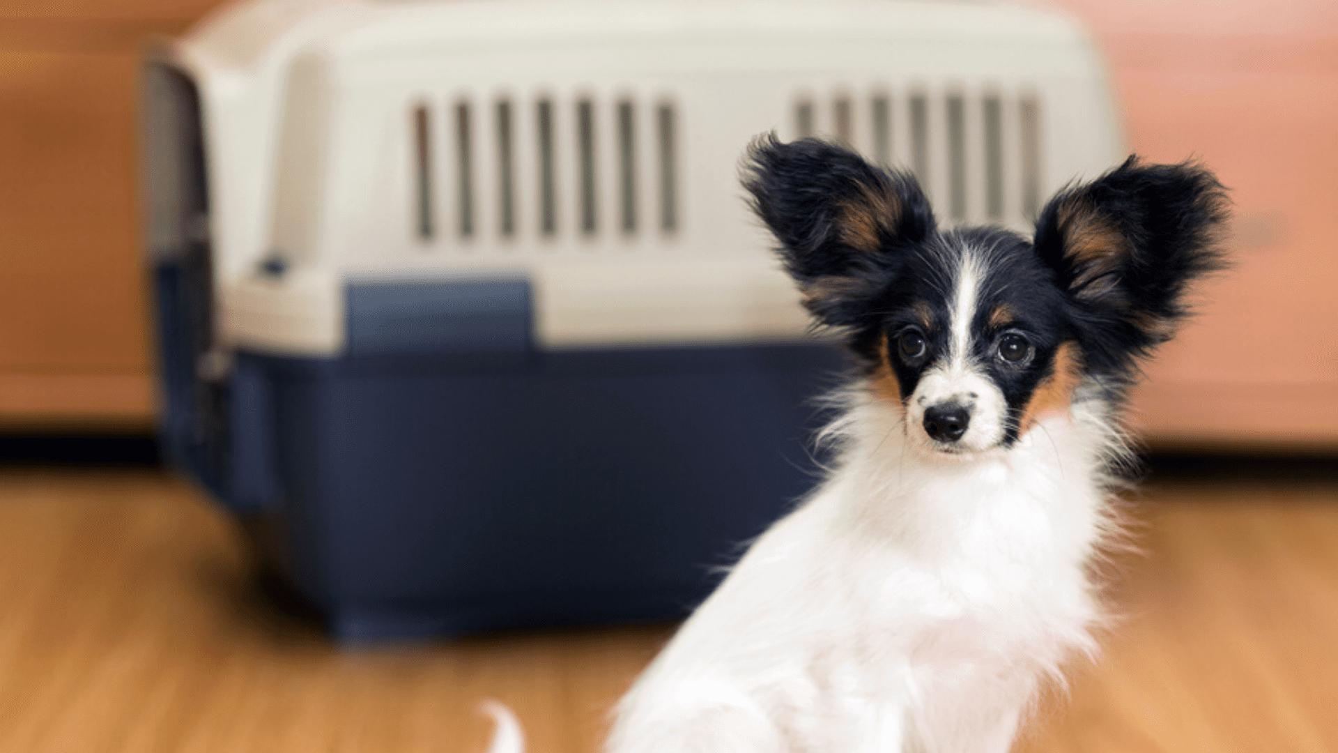 A caixa de transporte com abertura é aconselhada para todos os tipos de cachorro (Imagem: Reprodução/Shutterstock)