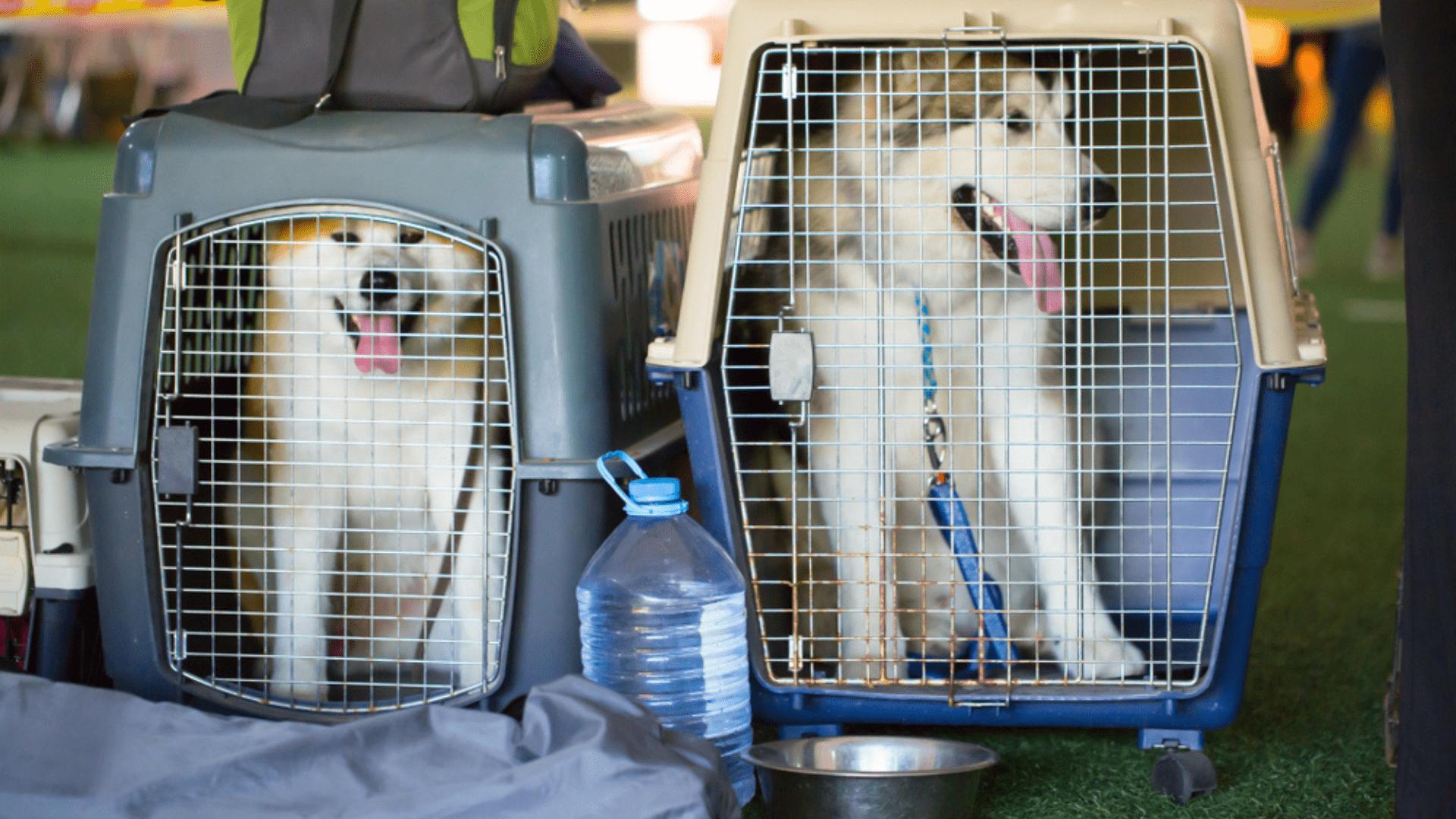 A caixa de transporte com rodinhas é ideal para cachorros grandes (Imagem: Reprodução/Shutterstock)